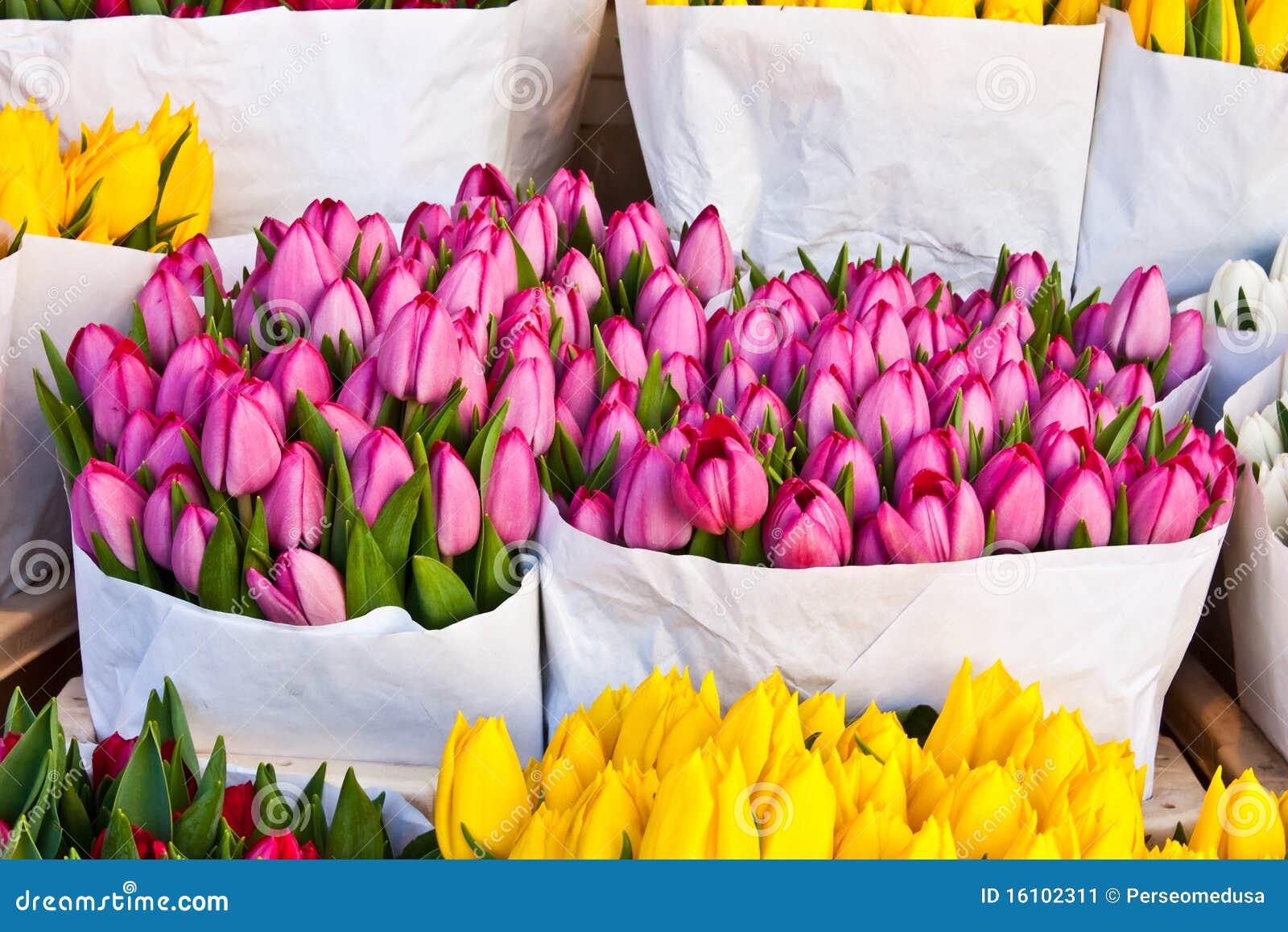 декабрь купить голандский тюльпан в москве район Луганской
