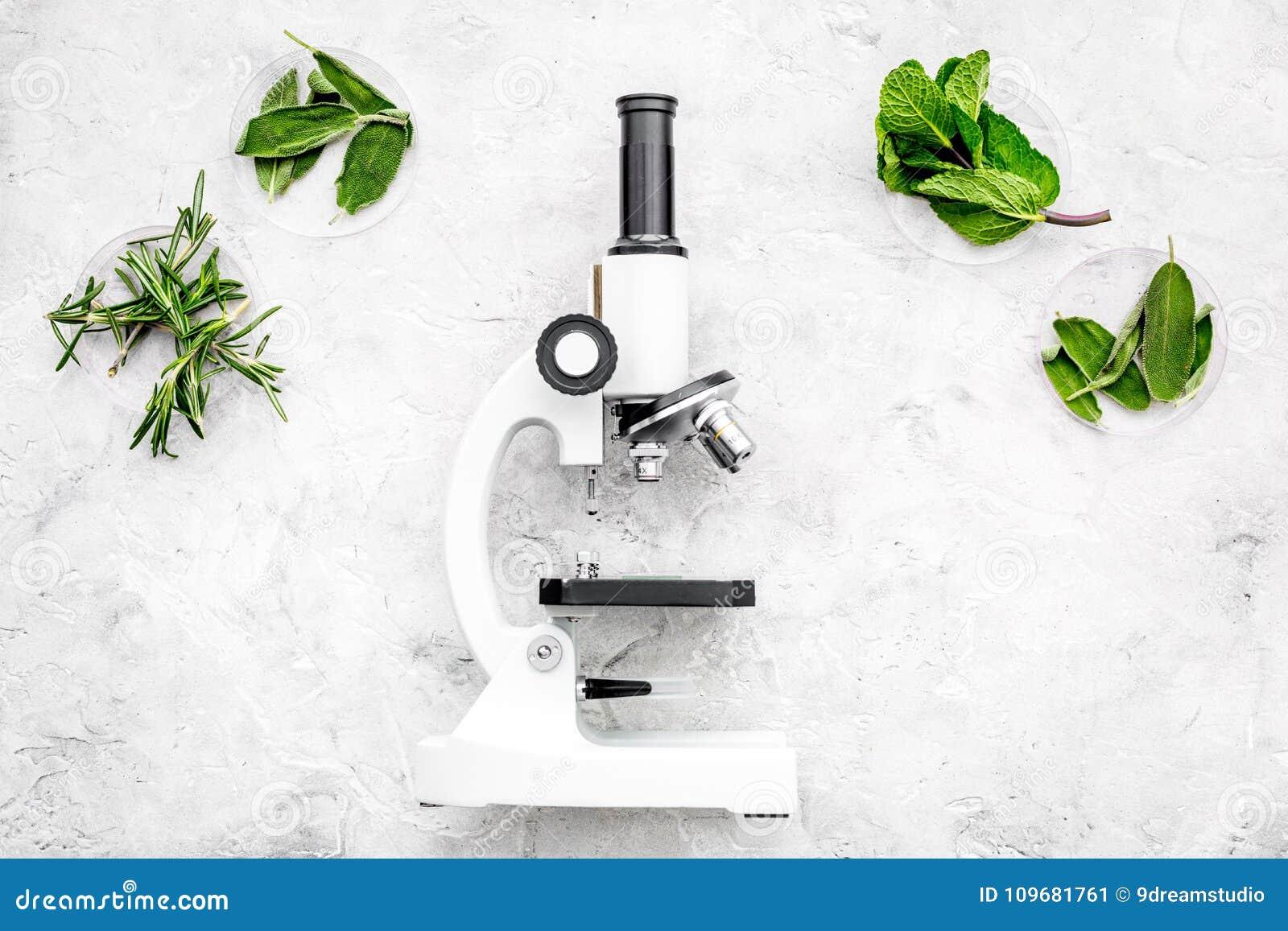 Análise de alimento Os inseticidas livram vegetais Ervas alecrins, hortelã perto do microscópio no espaço cinzento da cópia da op