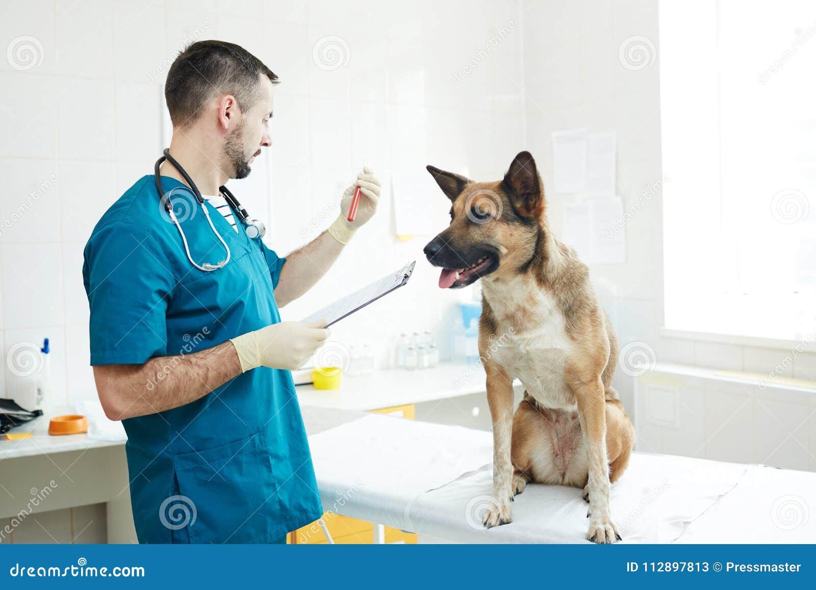 Análise do veterinário