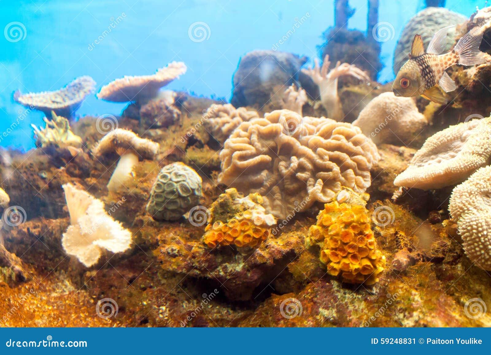 Anémona de mar