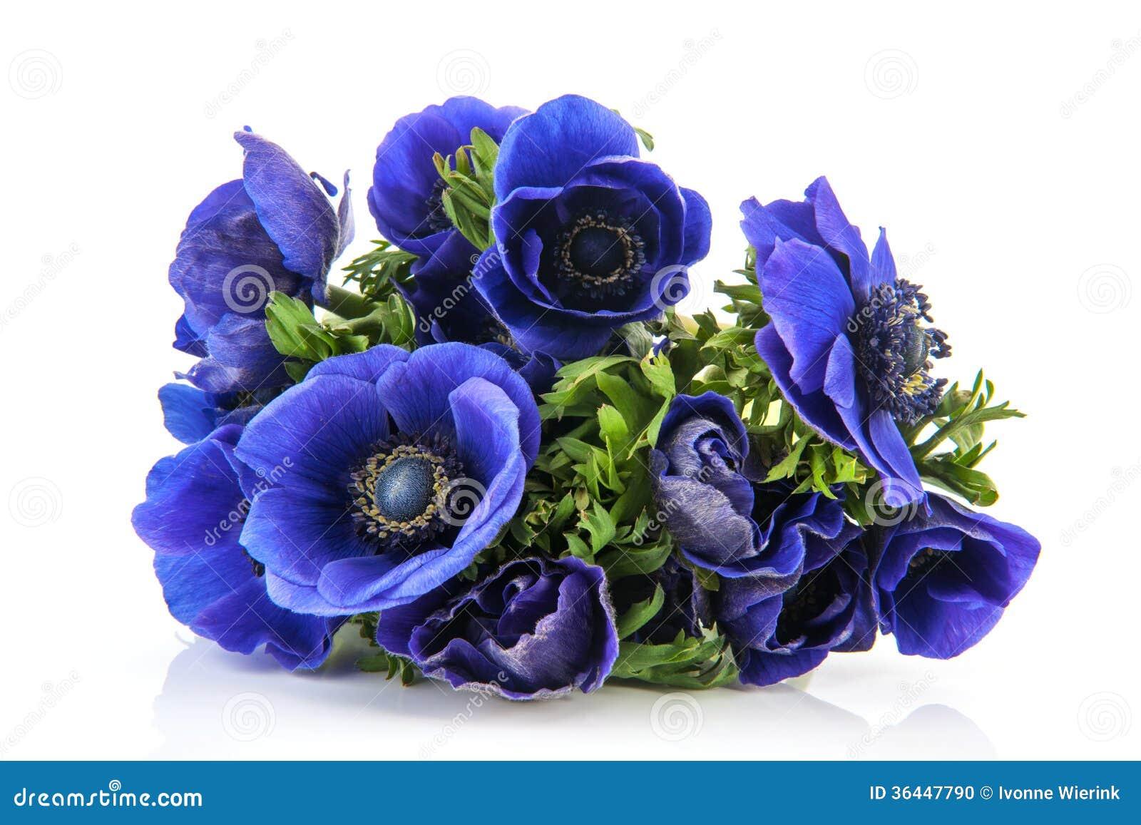An 233 Mones De Bleu De Bouquet Photo Stock Image 36447790