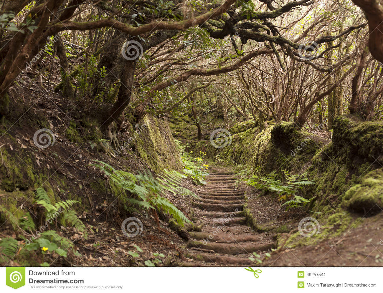 Anaga rain Forest in Tenerife
