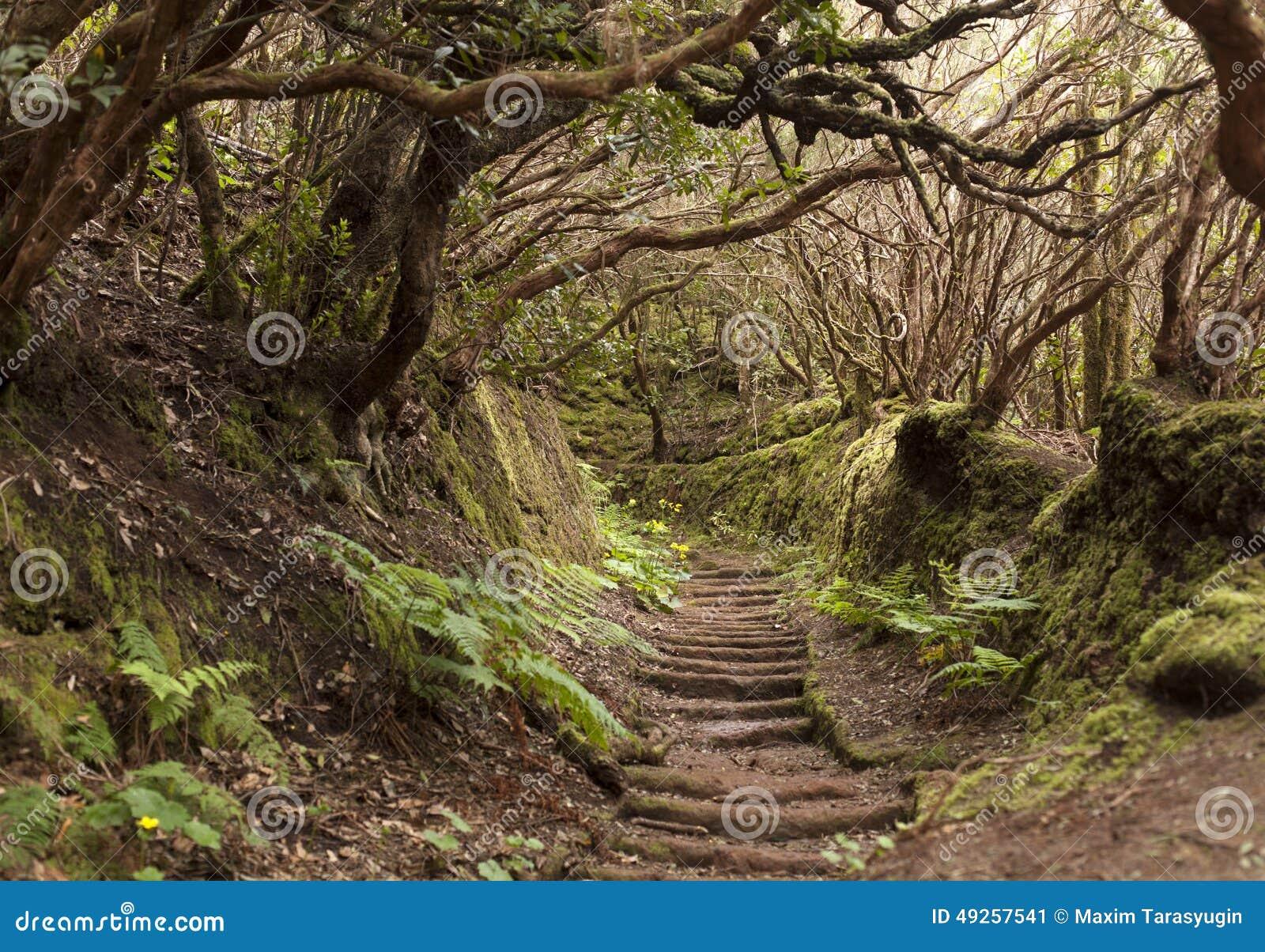 Anaga-Regen Wald in Teneriffa