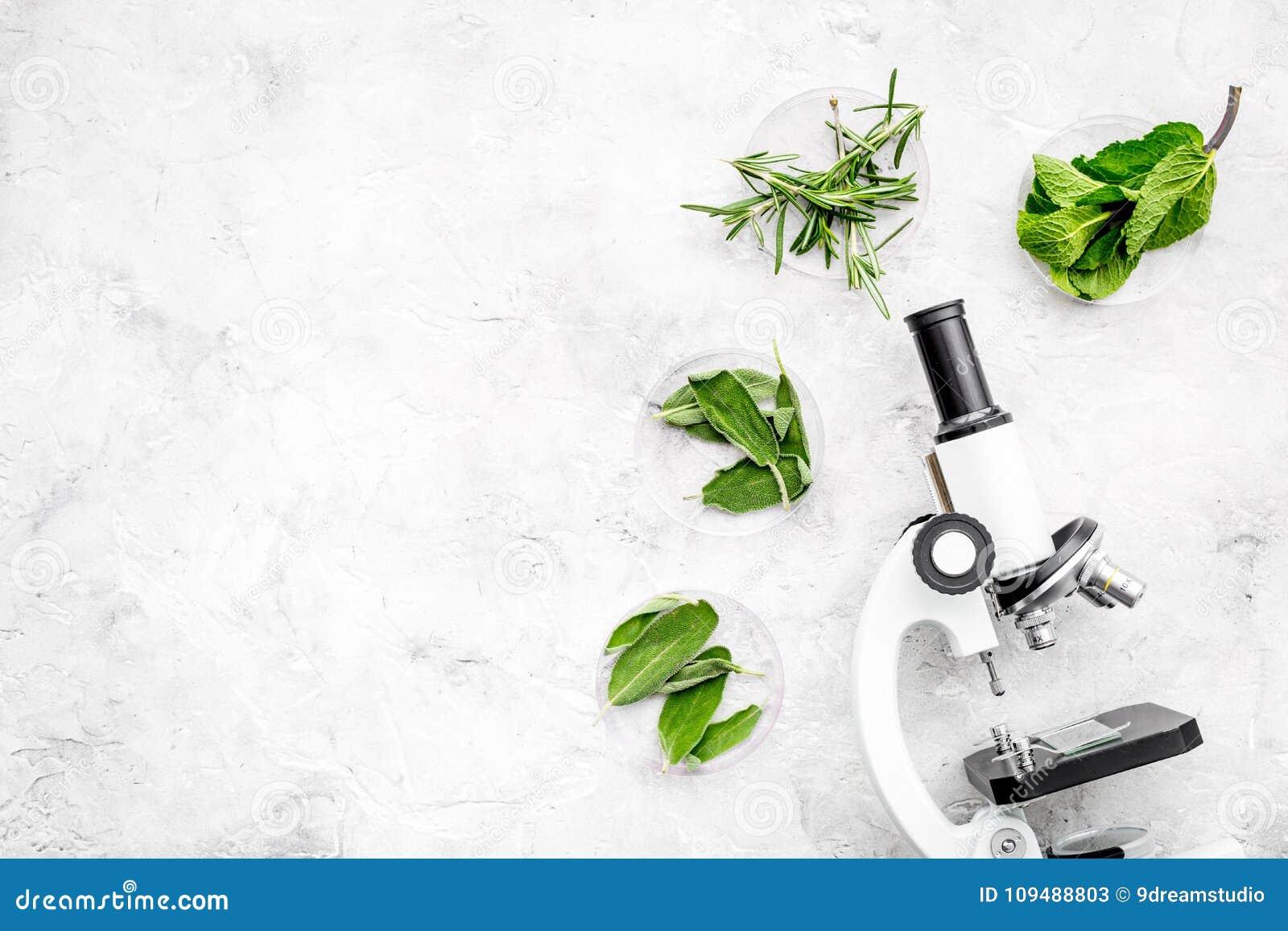 Analisi alimentare Gli antiparassitari liberano le verdure Erbe rosmarini, menta vicino al microscopio sullo spazio grigio della