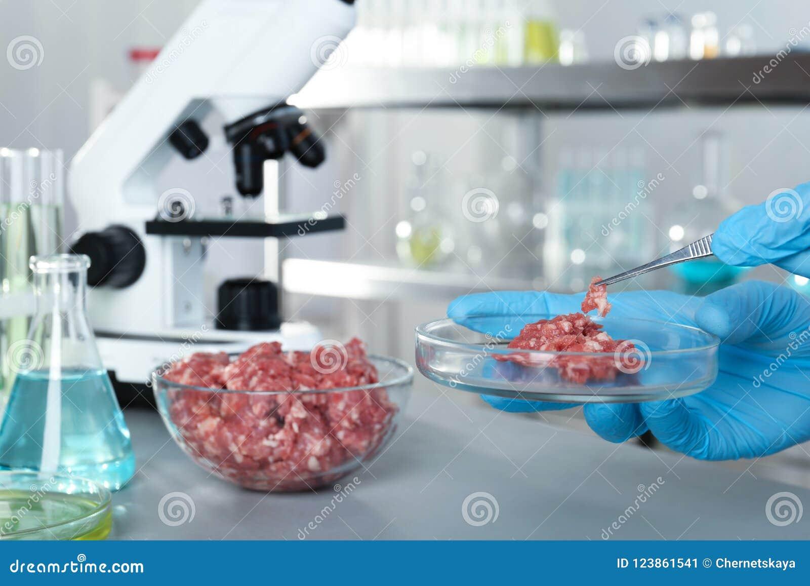 Analista que guarda o prato de petri com reunião crua