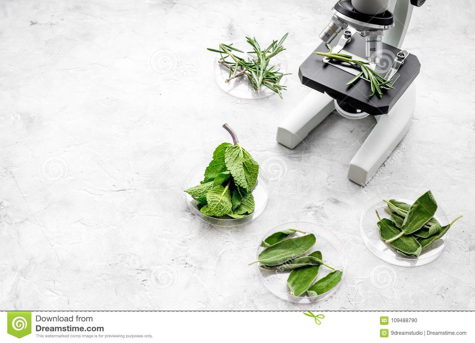 Analizować karmowego pojęcie zdrowych produktów Ziele rozmaryny, mennica pod mikroskopem na popielatej tło odgórnego widoku przes