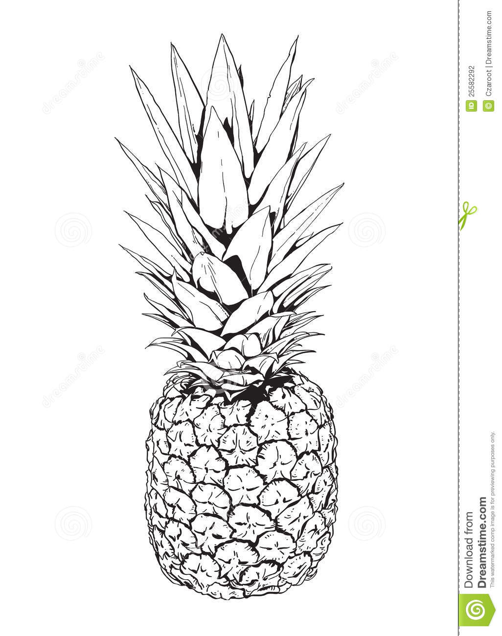 Ananas photographie stock image 25582292 - Dessin d un ananas ...
