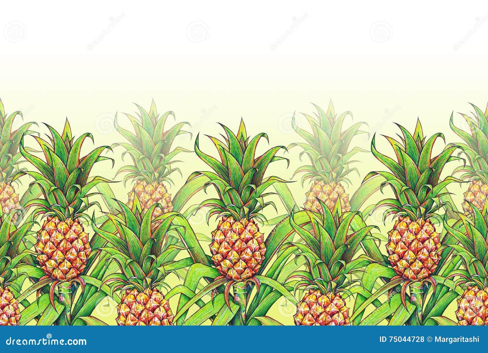 Ananas med gräsplan lämnar att växa för tropisk frukt i en lantgård Gräns för ram för modell för ananasteckningsmarkörer sömlös F
