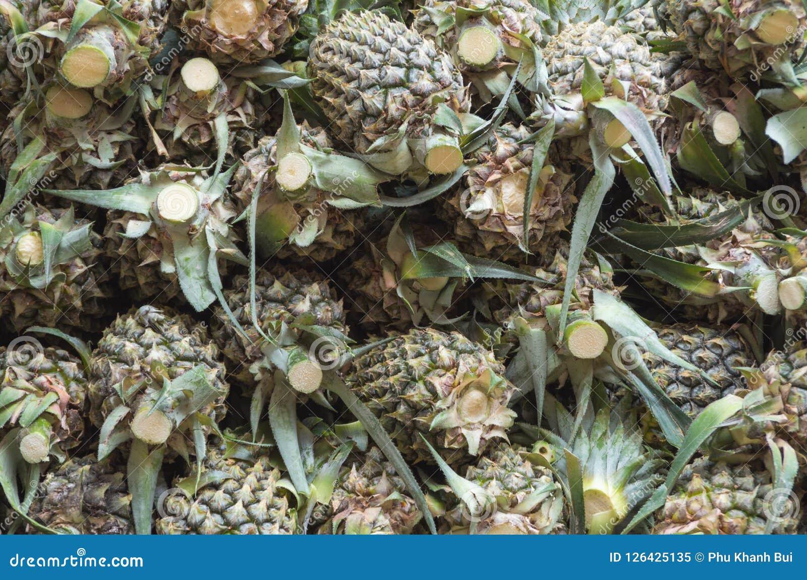 Ananas or pineapple fruit