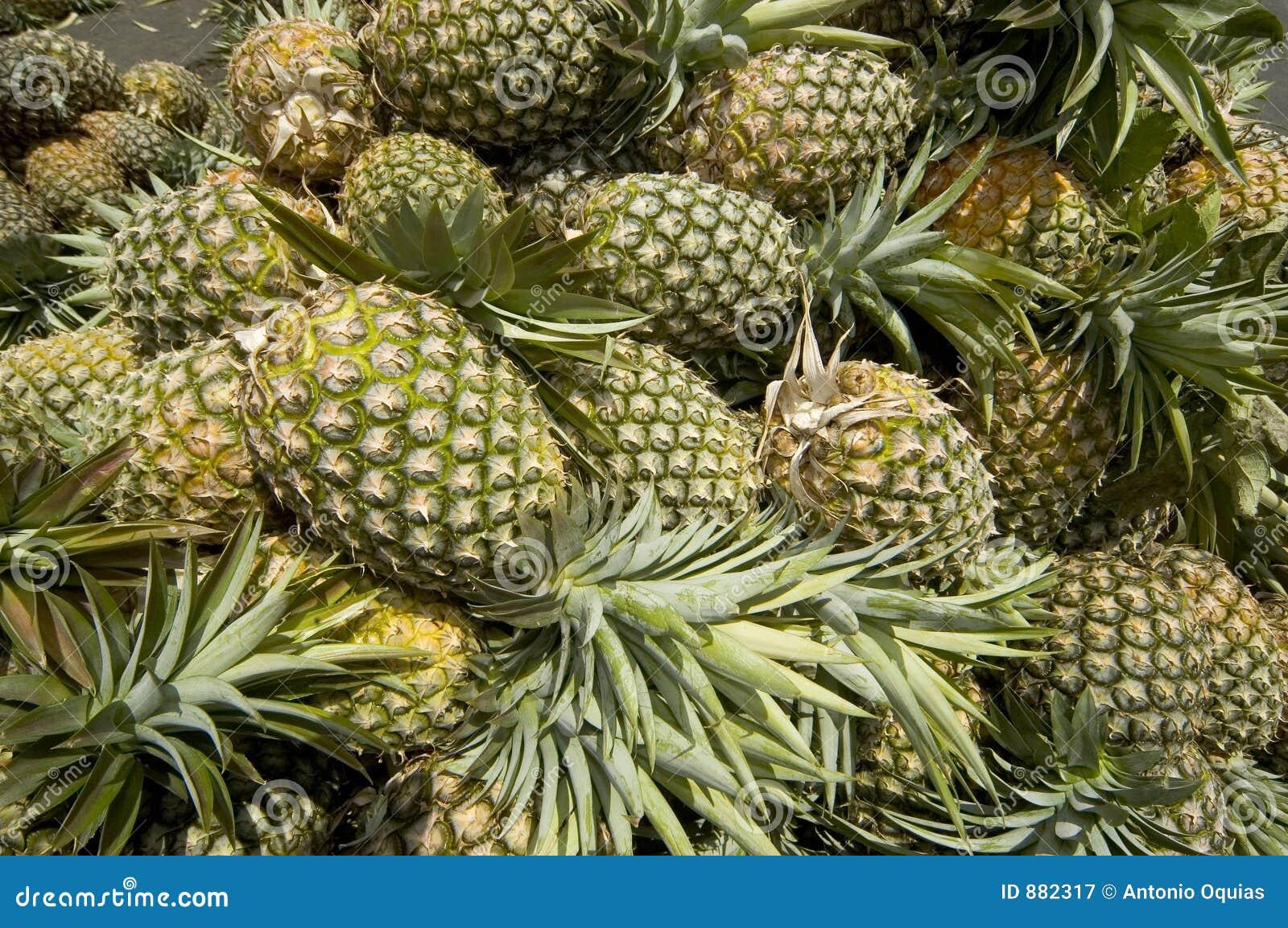 Ananas zbiorów
