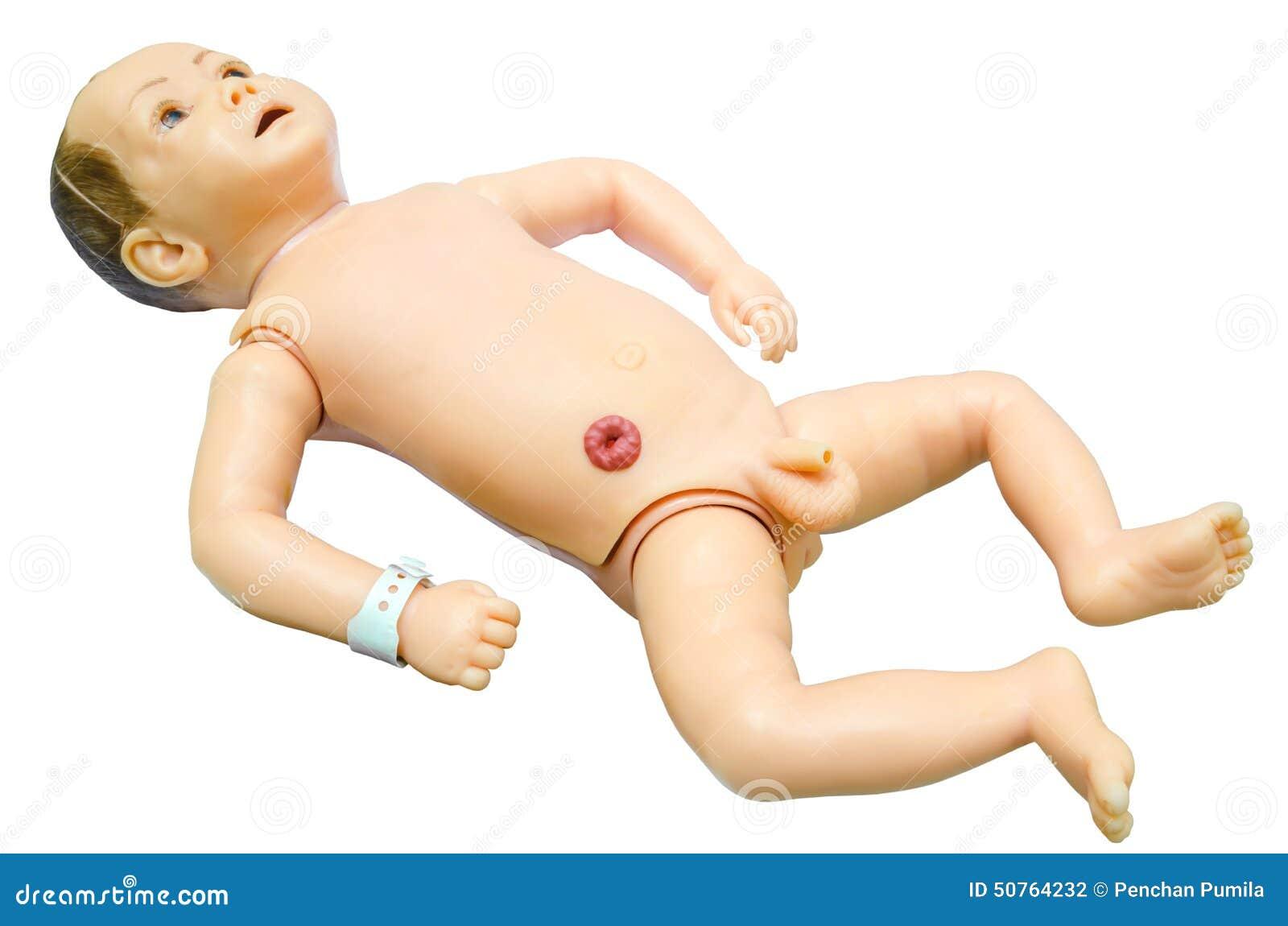 Anatomía Del Bebé Modelo De Entrenamiento Para Los Estudiantes Que ...
