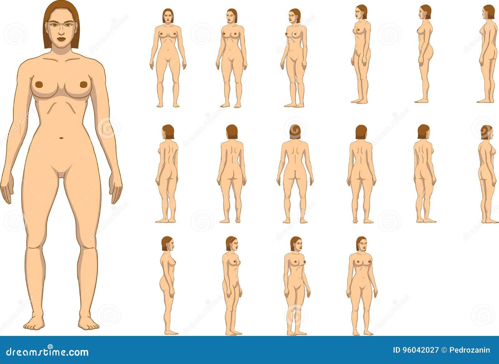 Anatomía Del Cuerpo De La Mujer Ilustración del Vector - Ilustración ...