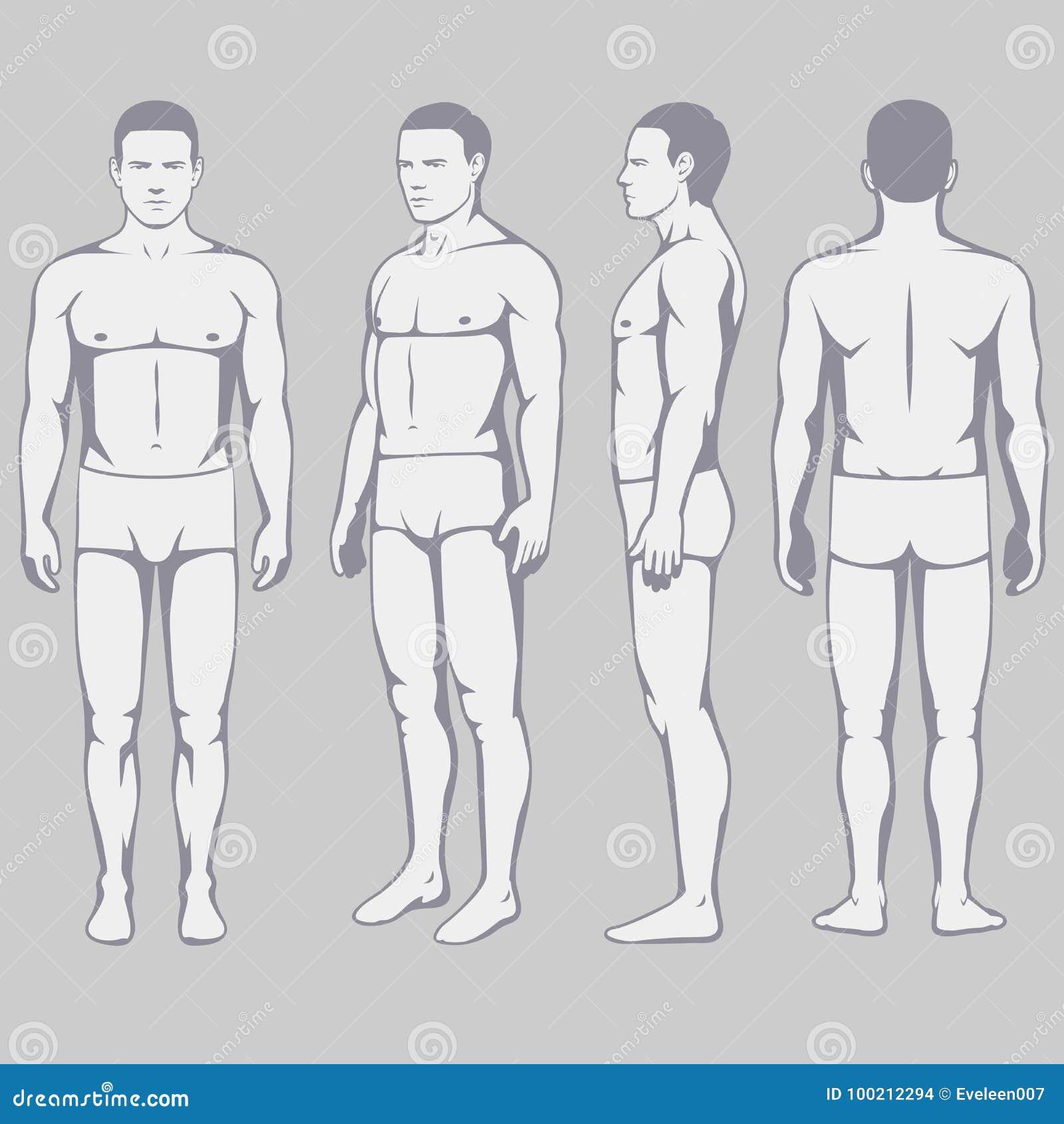 Anatomía Del Cuerpo, Lado Trasero Del Frente Del Hombre Del Vector ...