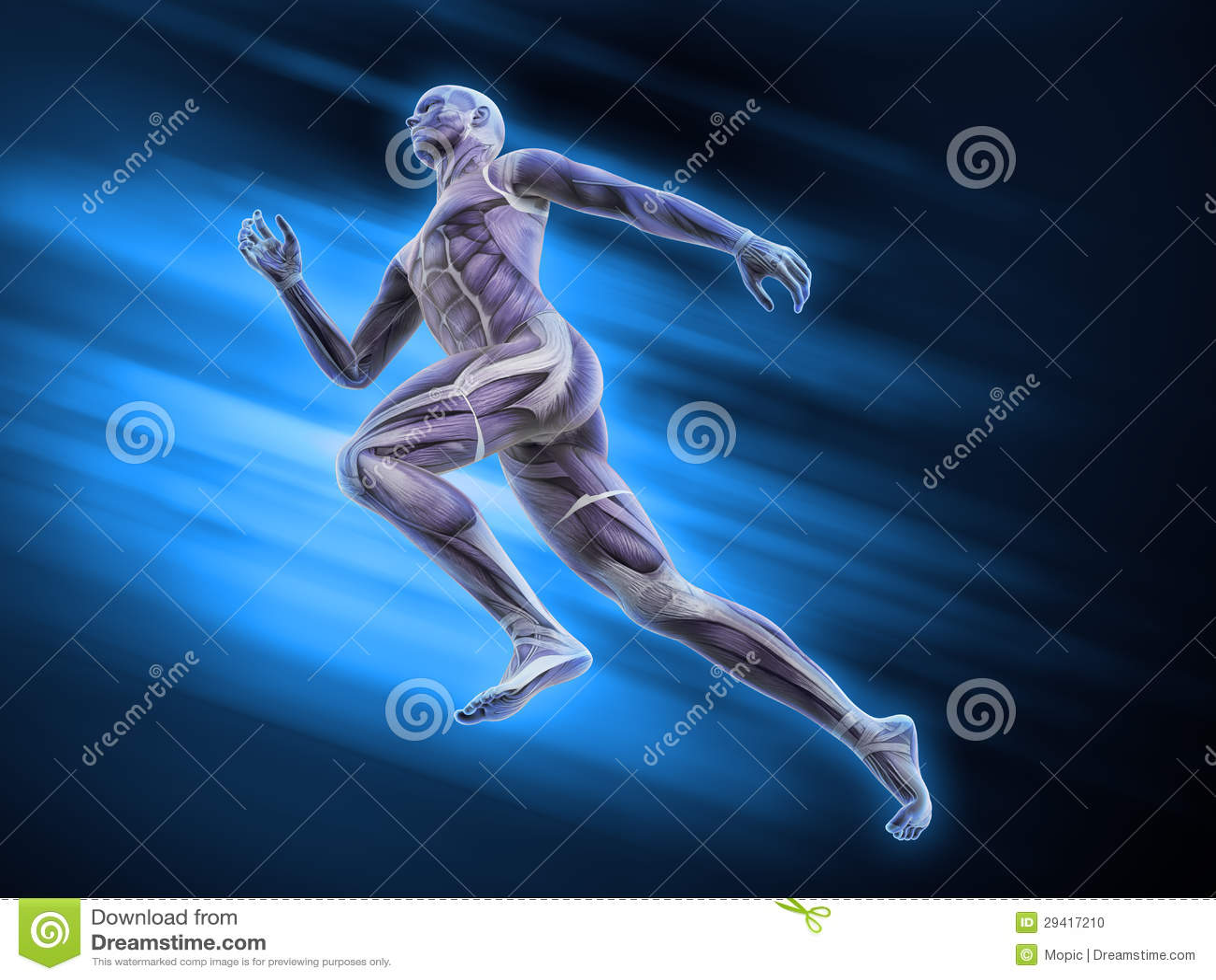 Anatomía Del Deporte - Corredor Stock de ilustración - Ilustración ...