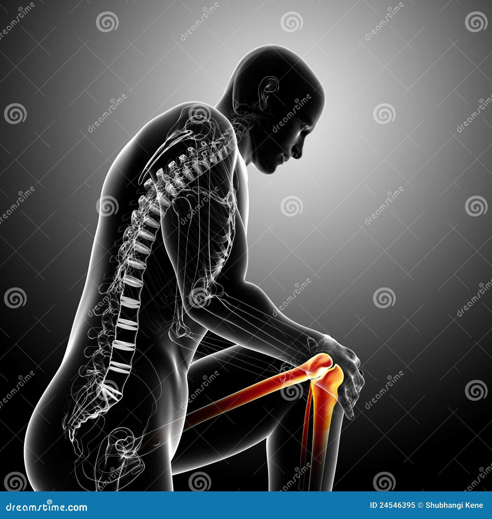 Anatomía Del Dolor De La Rodilla En Gris Stock de ilustración ...