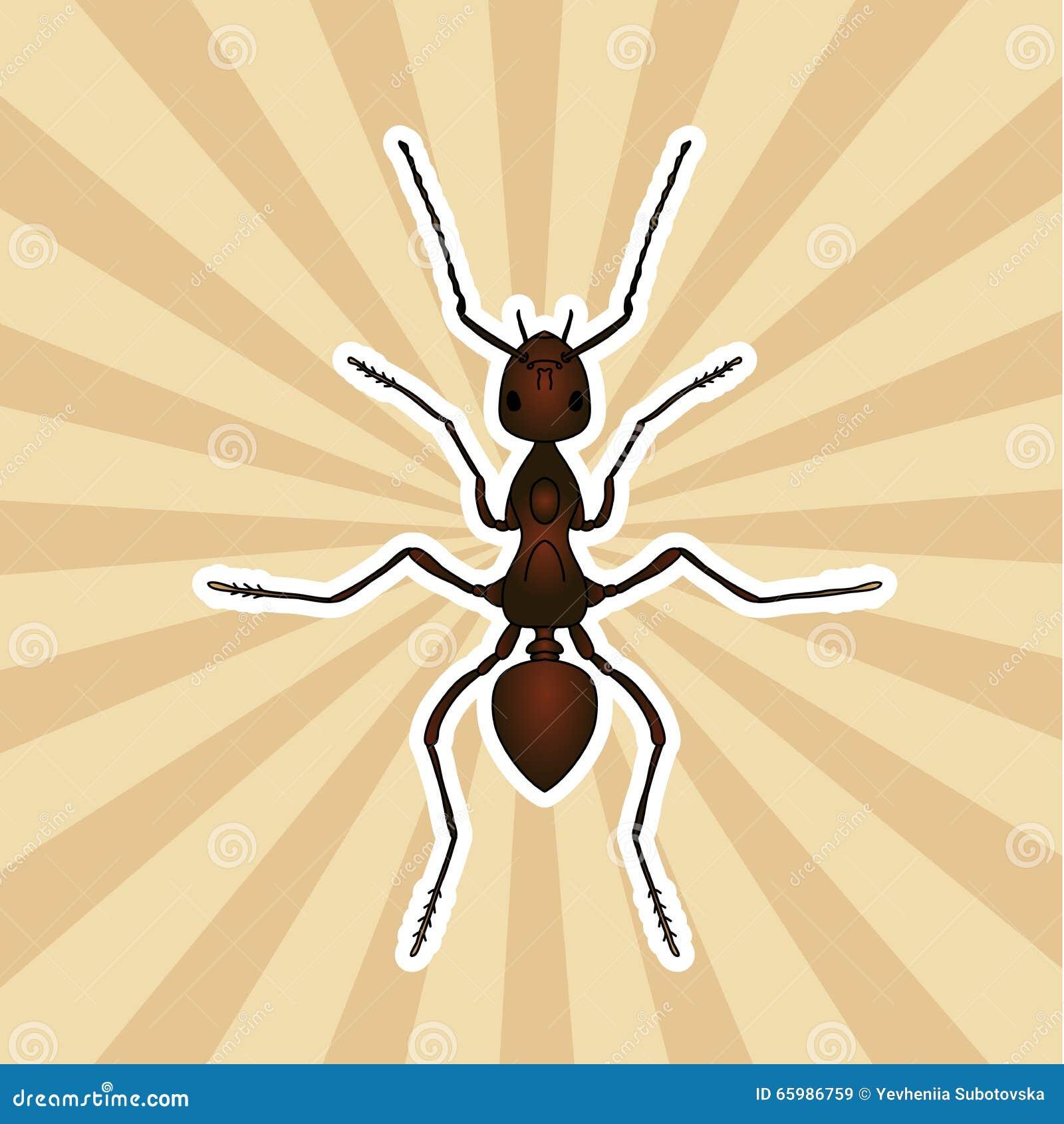 Anatomía Del Insecto Exsecta De La Formica De La Etiqueta Engomada ...