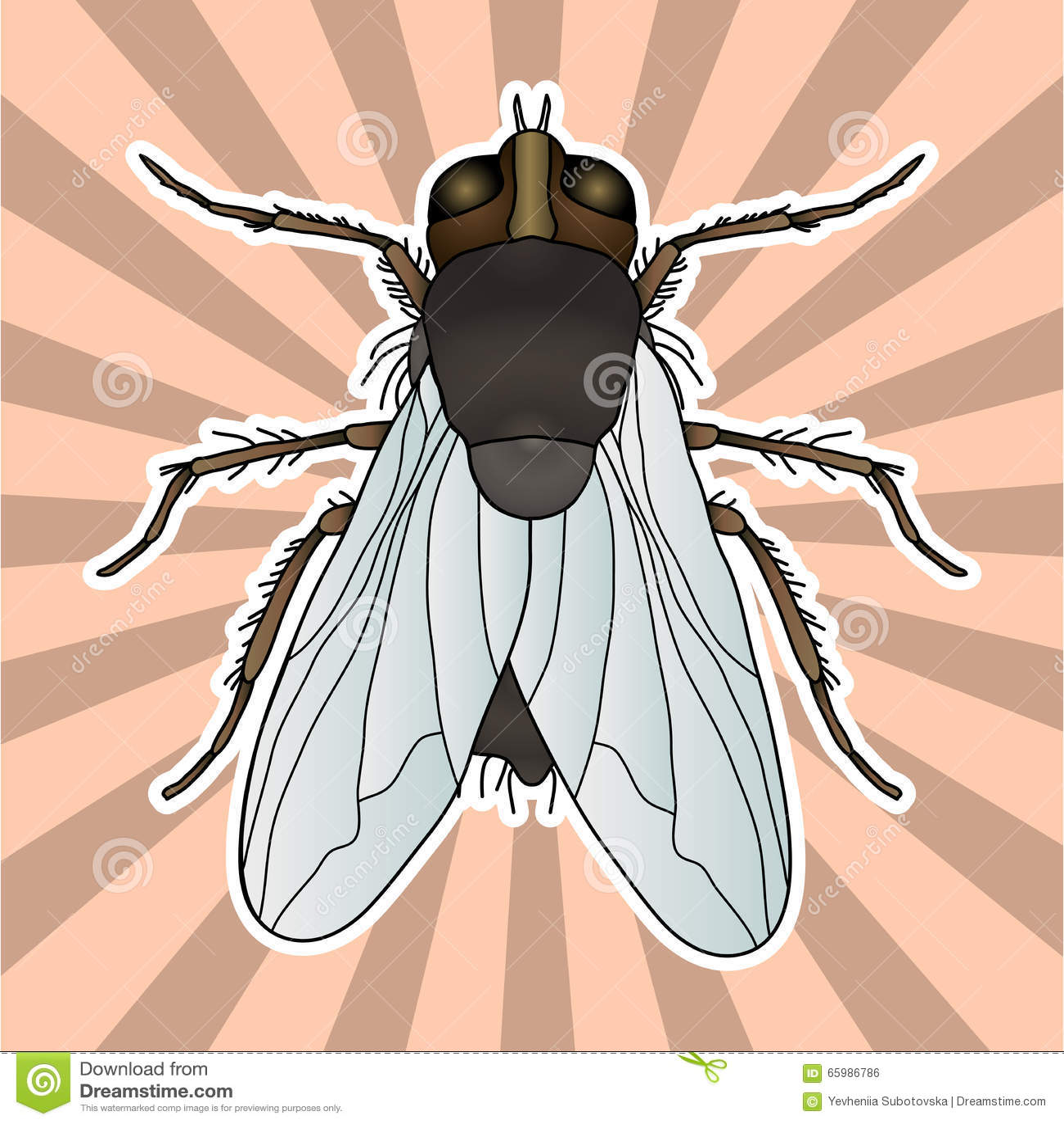 Anatomía Del Insecto Mosca De La Etiqueta Engomada Domestica Del ...
