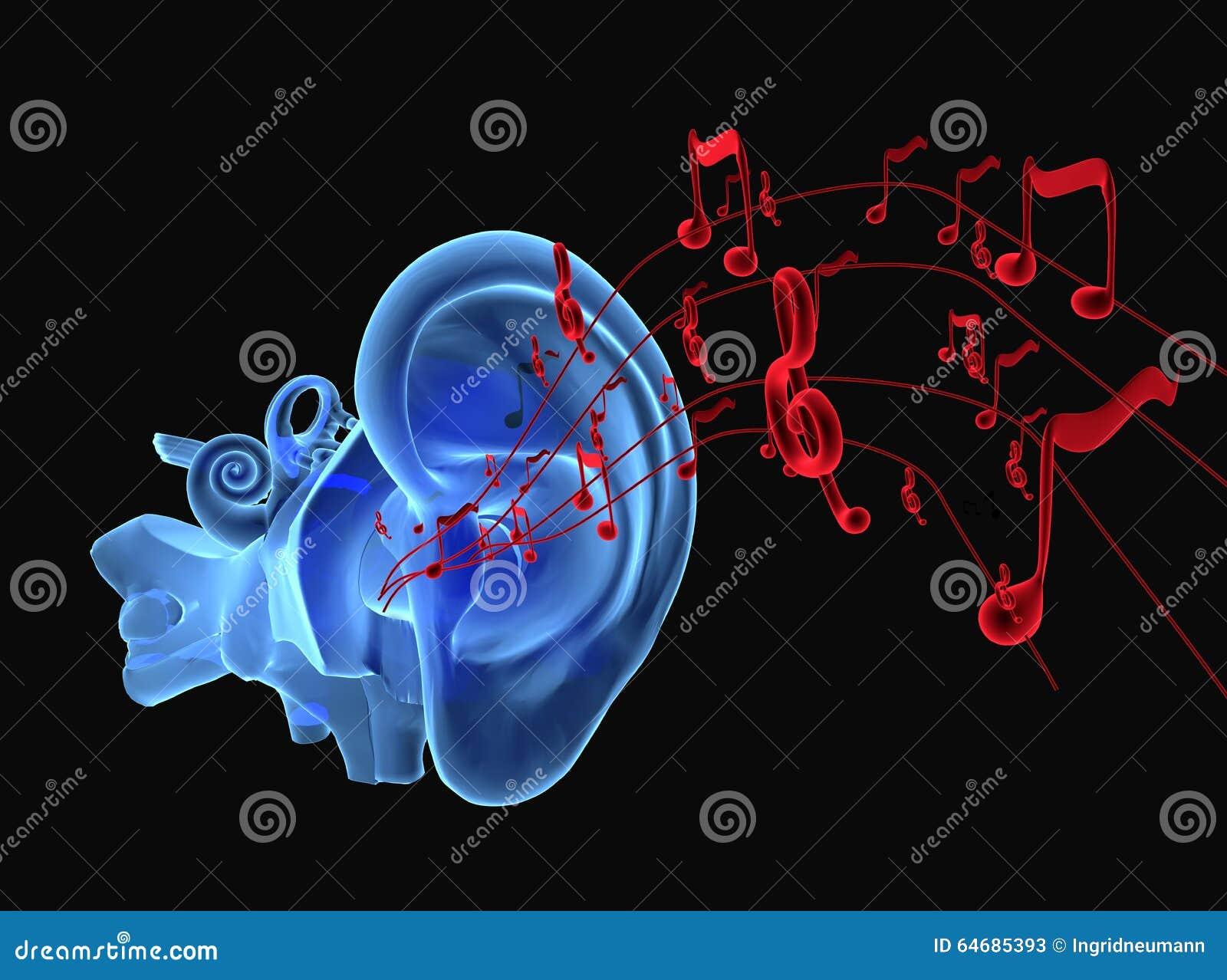 Anatomía Del Oído 3D Con Las Notas Stock de ilustración ...