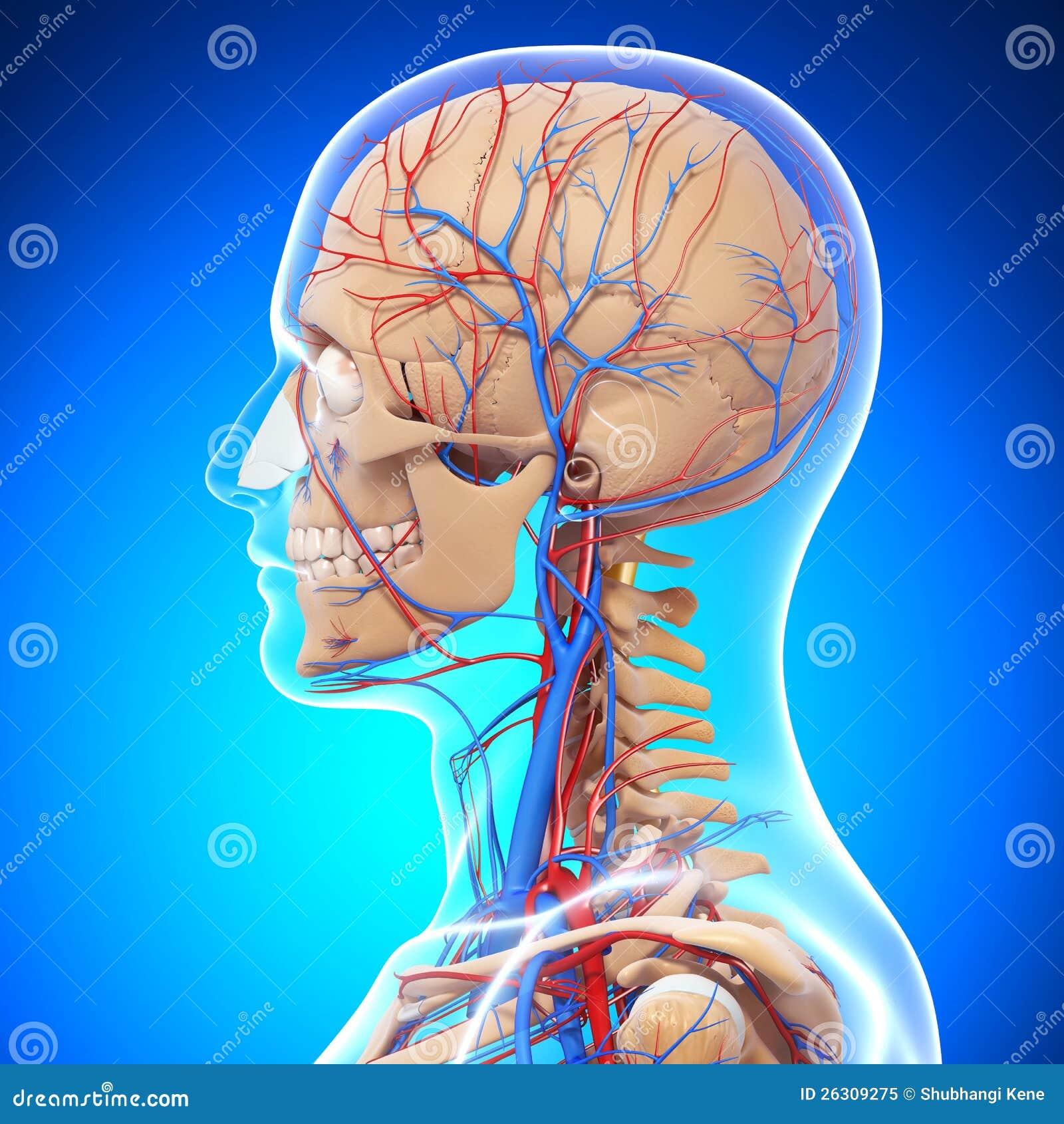 Encantador Examen Anatómico A Las 21 Semanas Regalo - Imágenes de ...