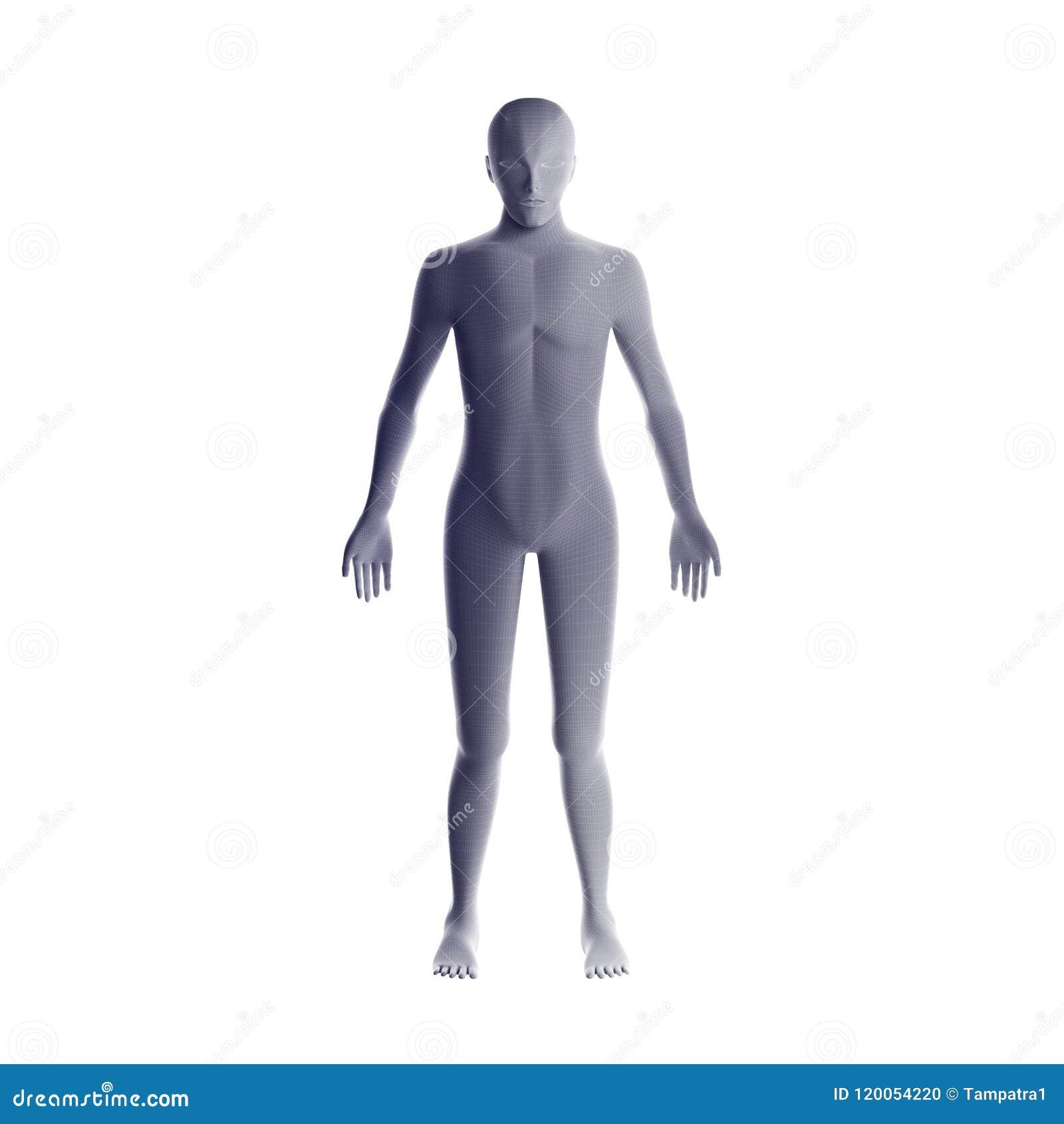 Lujoso Grises Anatomía S10 Bosquejo - Imágenes de Anatomía Humana ...