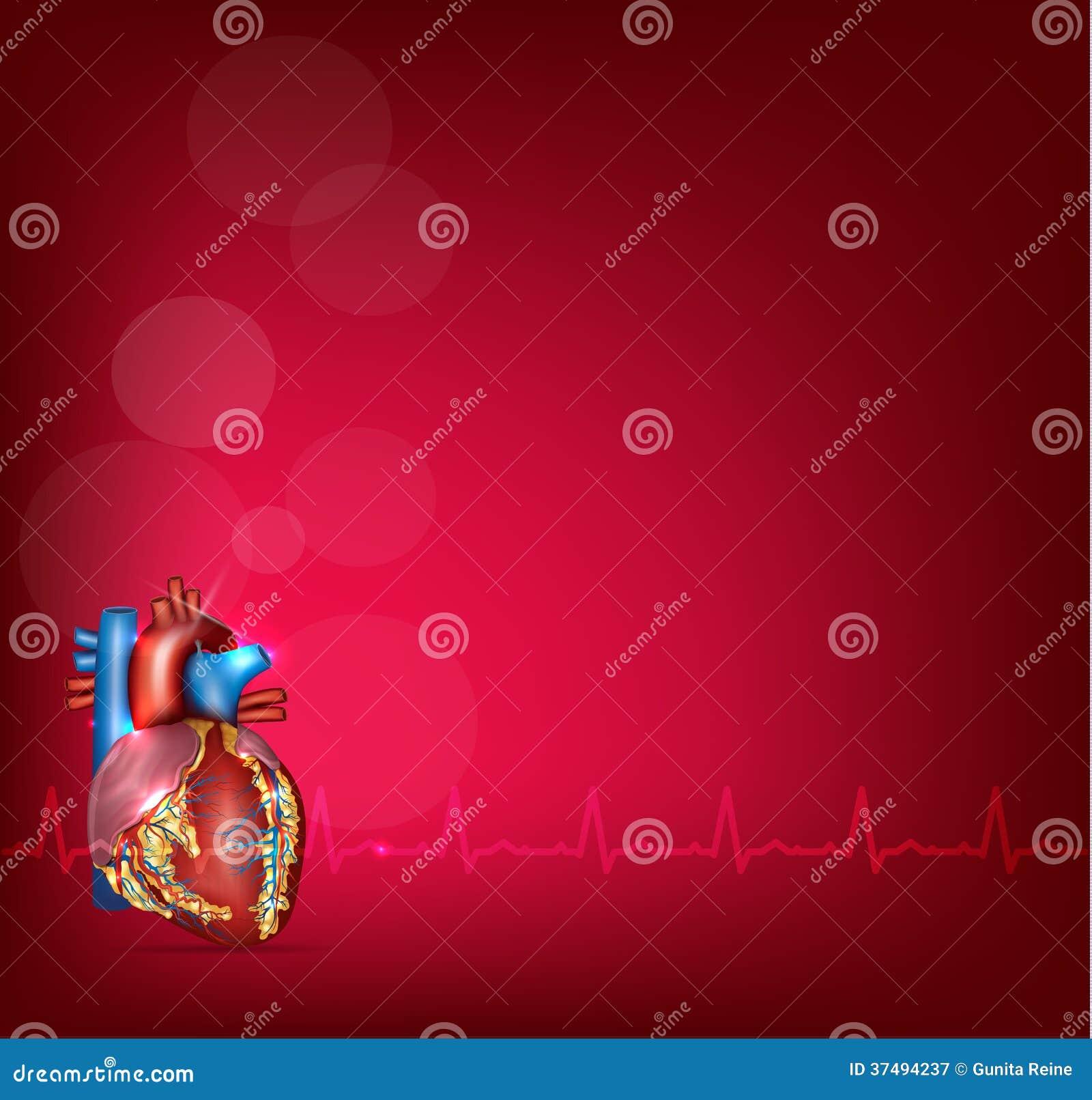 Anatomía Humana Del Corazón En Un Fondo Rojo Brillante Ilustración ...