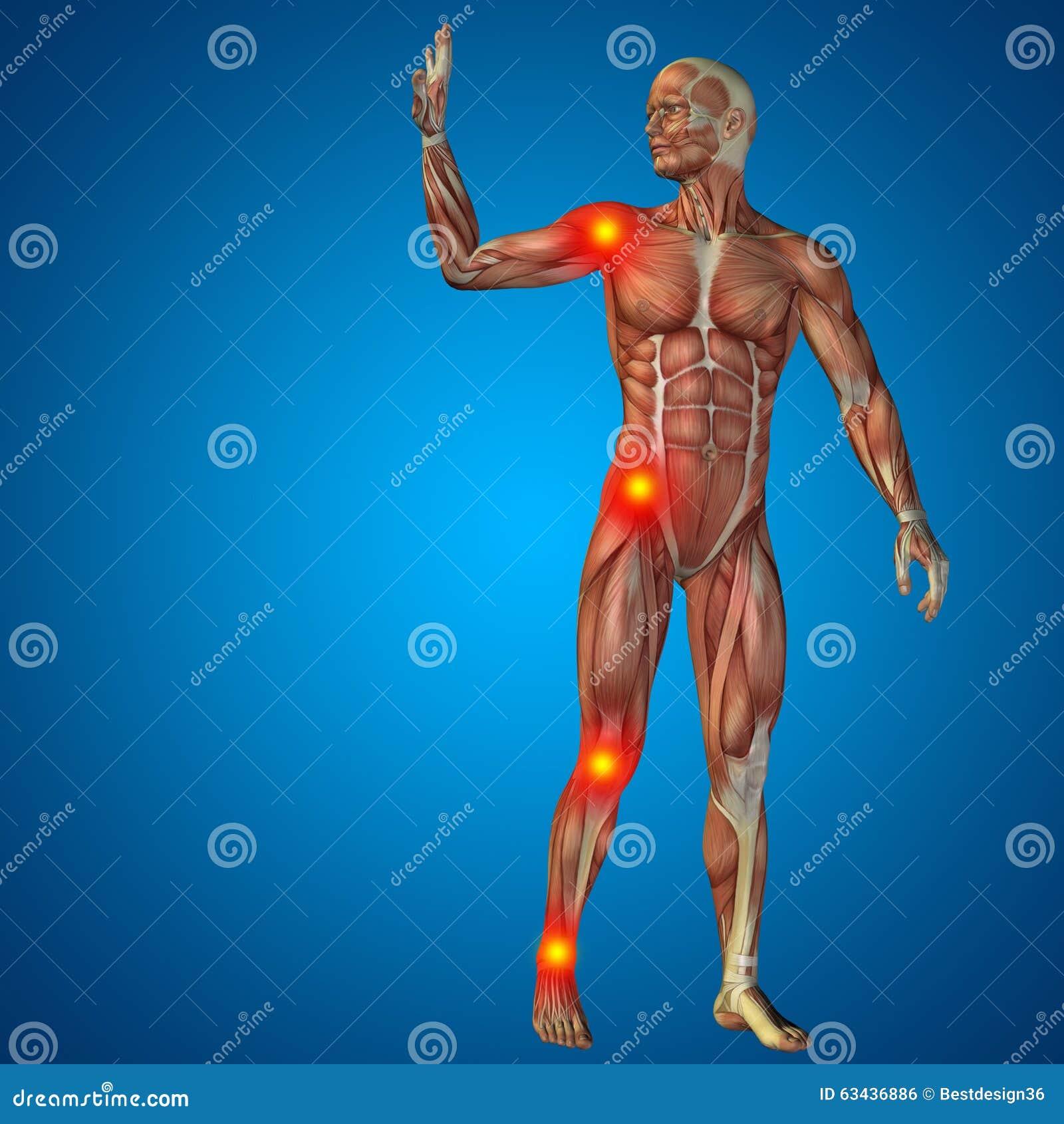 Anatomía Humana Del Dolor Del Hombre 3D En Fondo Azul Stock de ...