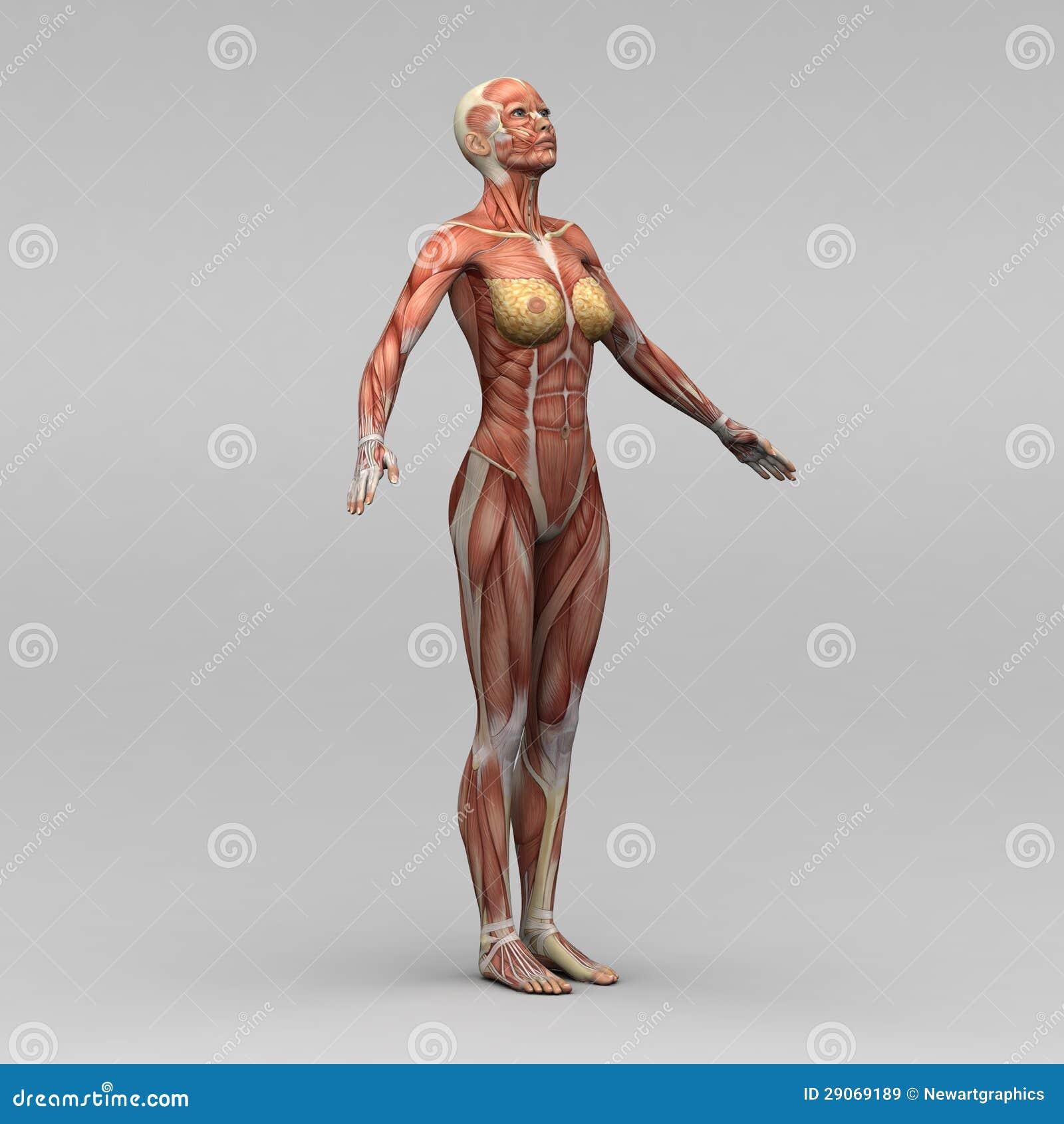 Lujoso Femeninos Fotos Anatomía Embellecimiento - Anatomía de Las ...