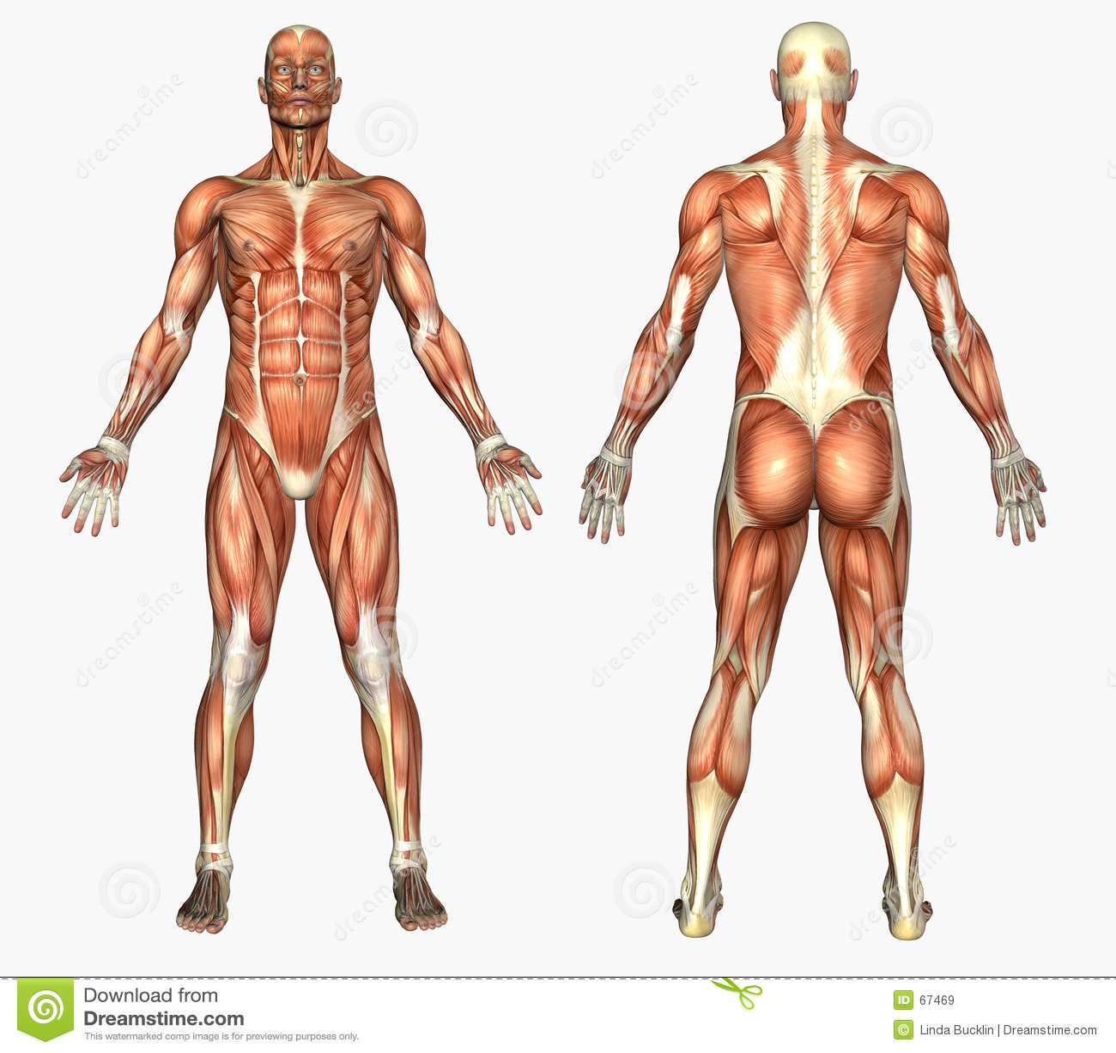 Informacion General E.F.: Anatomía Humana. Generalidades.