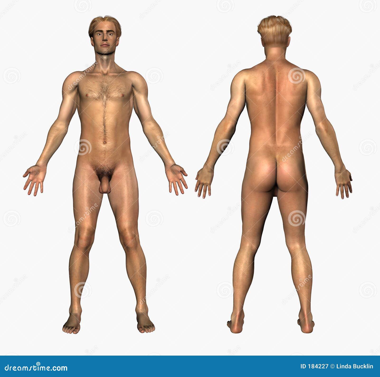 Anatomía humana - varón desnudo - frente y parte posterior