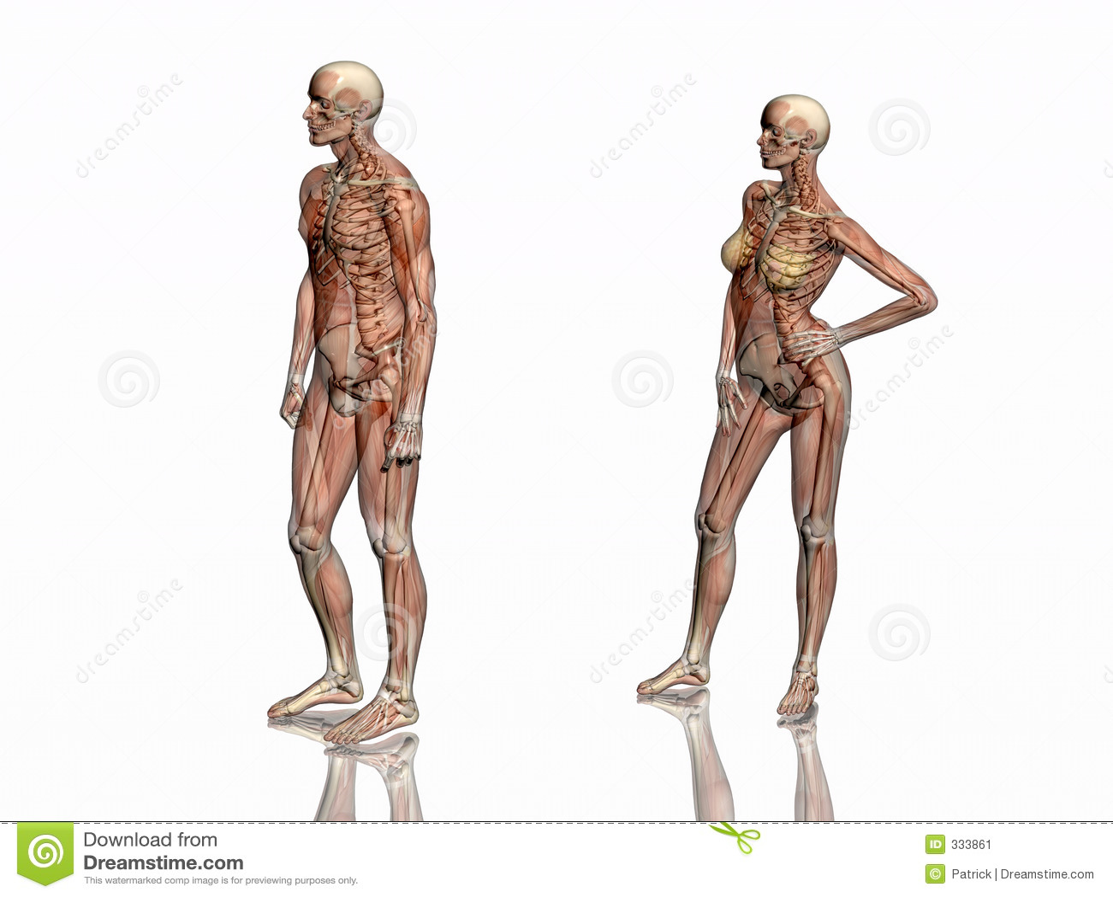 Atractivo La Anatomía Del Esqueleto De Pollo Elaboración - Imágenes ...