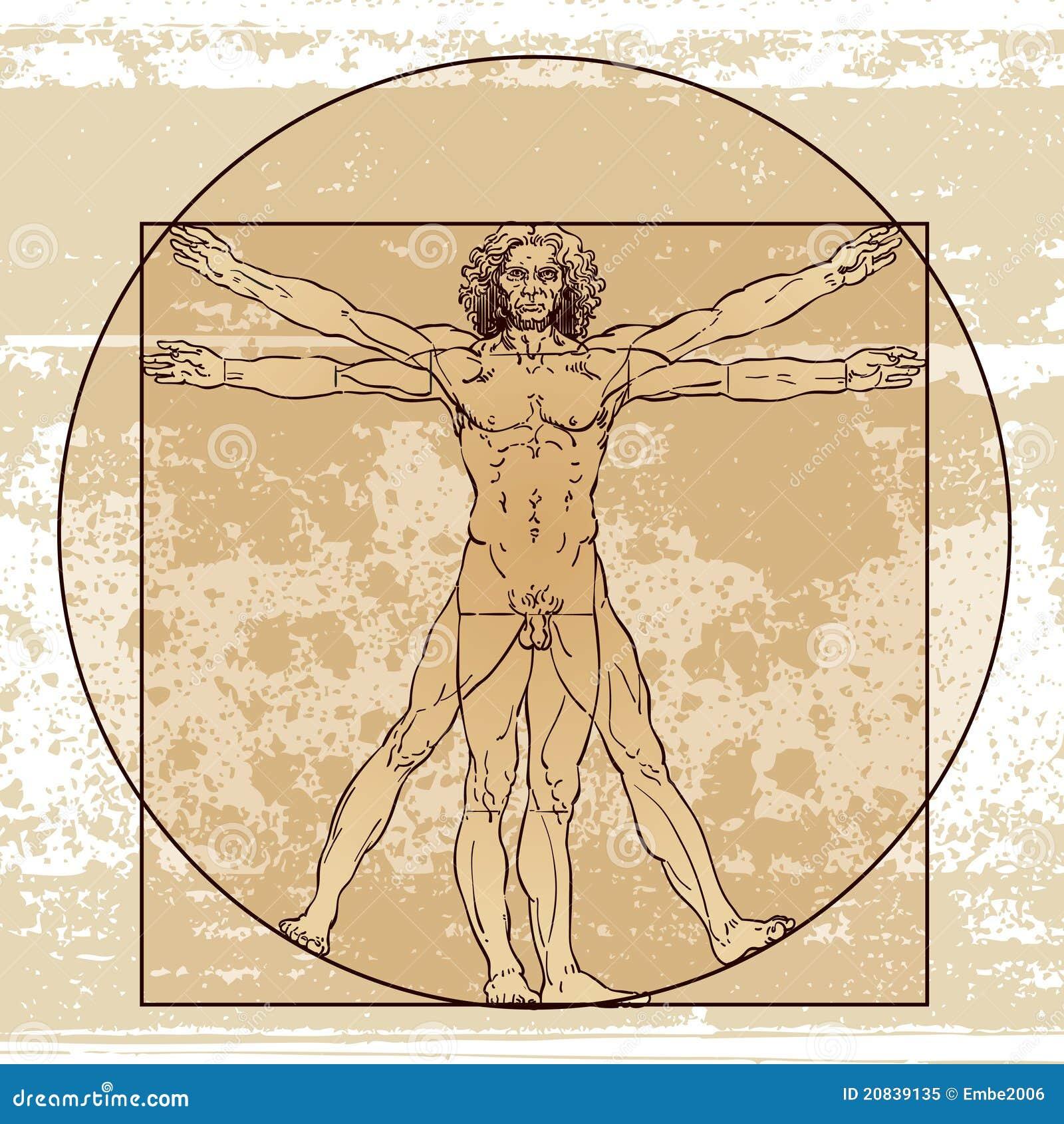 Anatomía masculina imagen editorial. Ilustración de círculo - 20839135