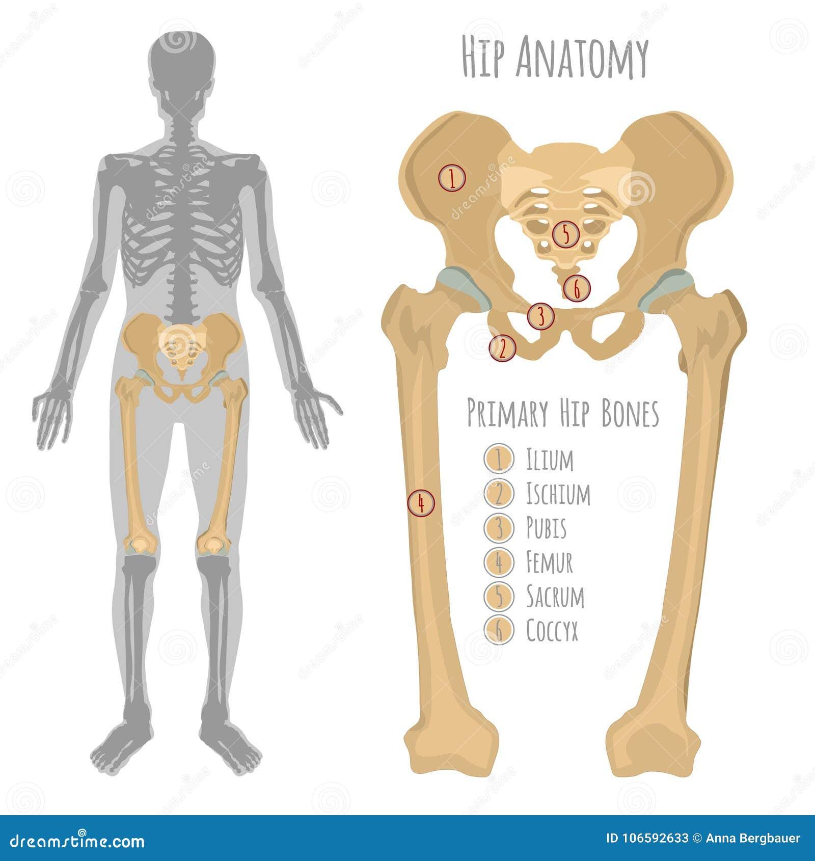 dolor de hueso de la cadera superior