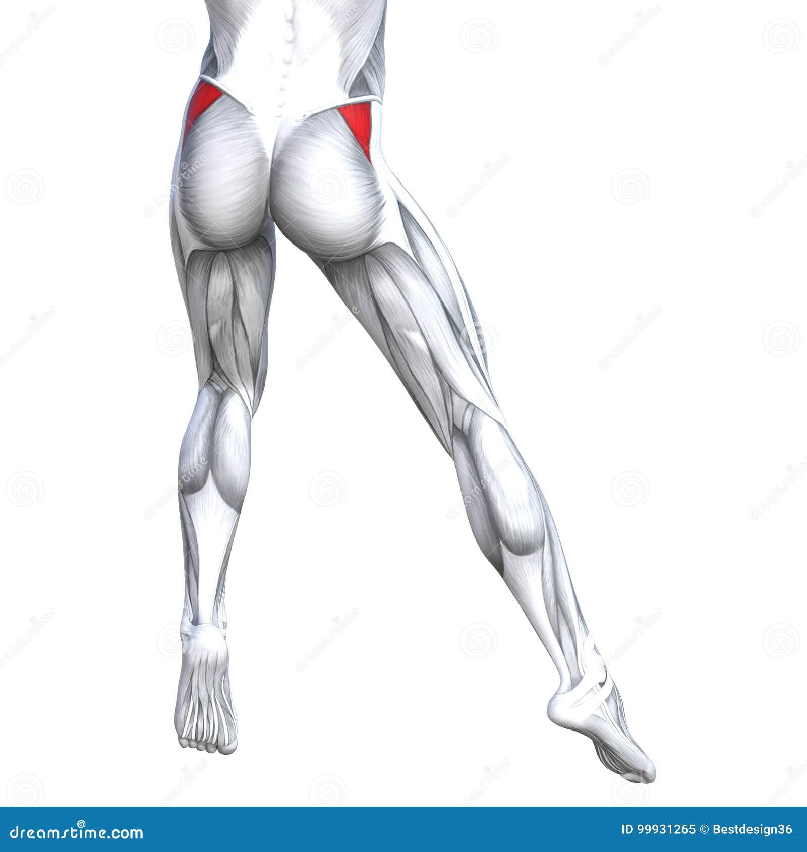 Increíble Tendones Diagrama Pie Anatomía Foto - Anatomía de Las ...