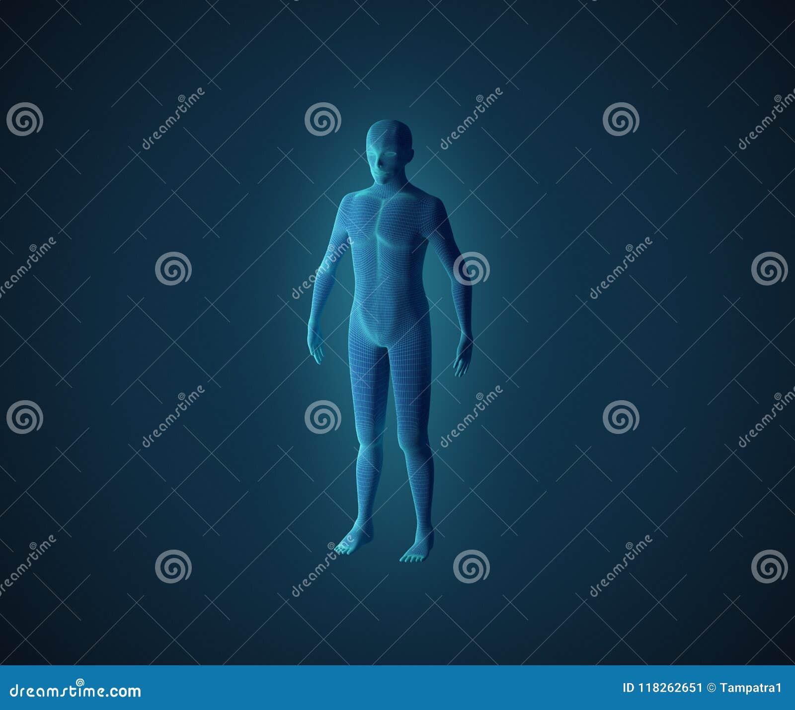 Anatomi av det male muskulösa systemet Blått mänskligt wireframehologram