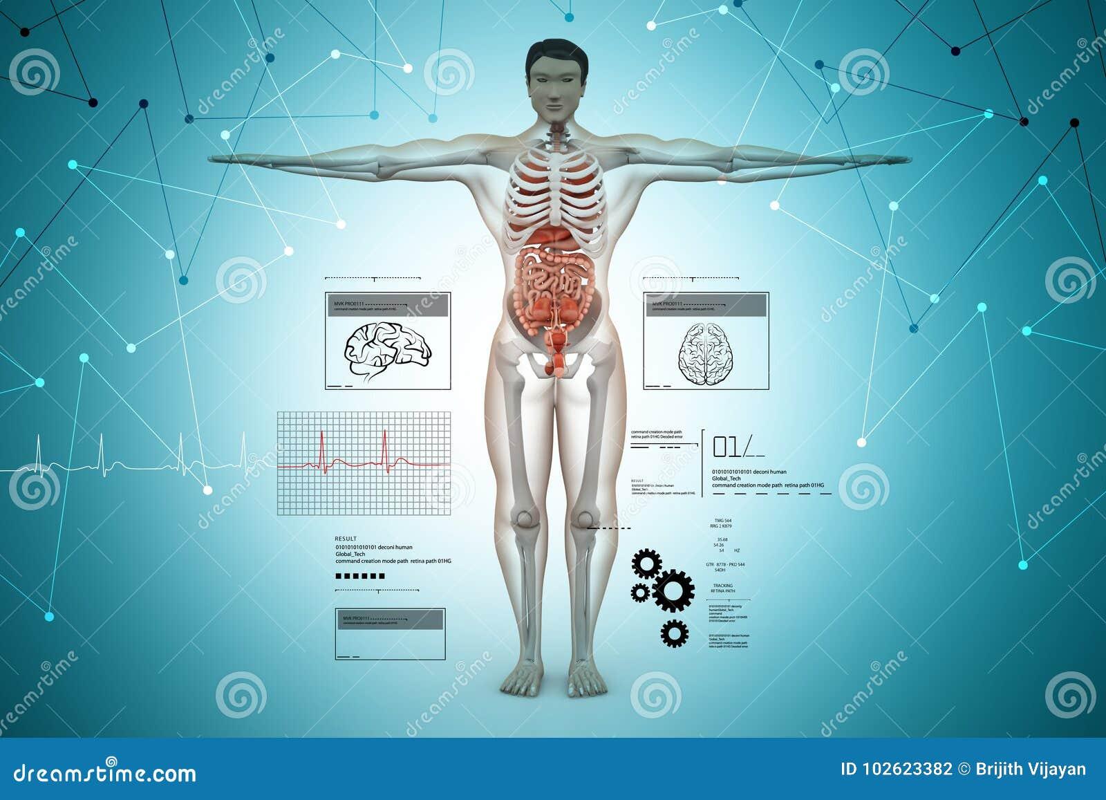Anatomi av människokroppen
