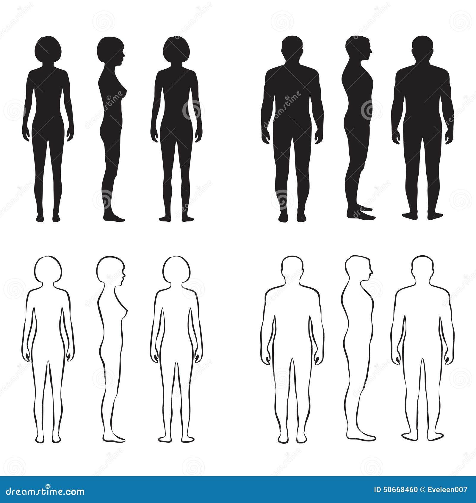 Anatomia del corpo umano,