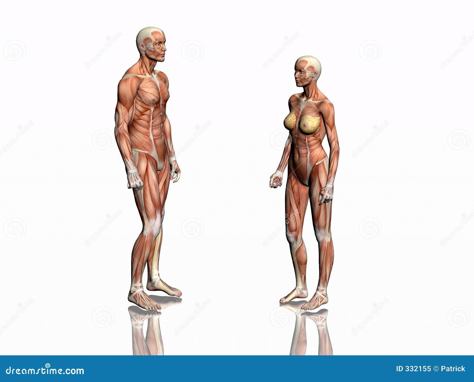Anatomia dell uomo e della donna.