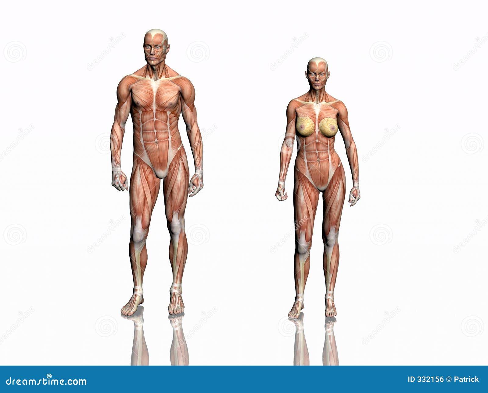 Anatomia do homem e da mulher.
