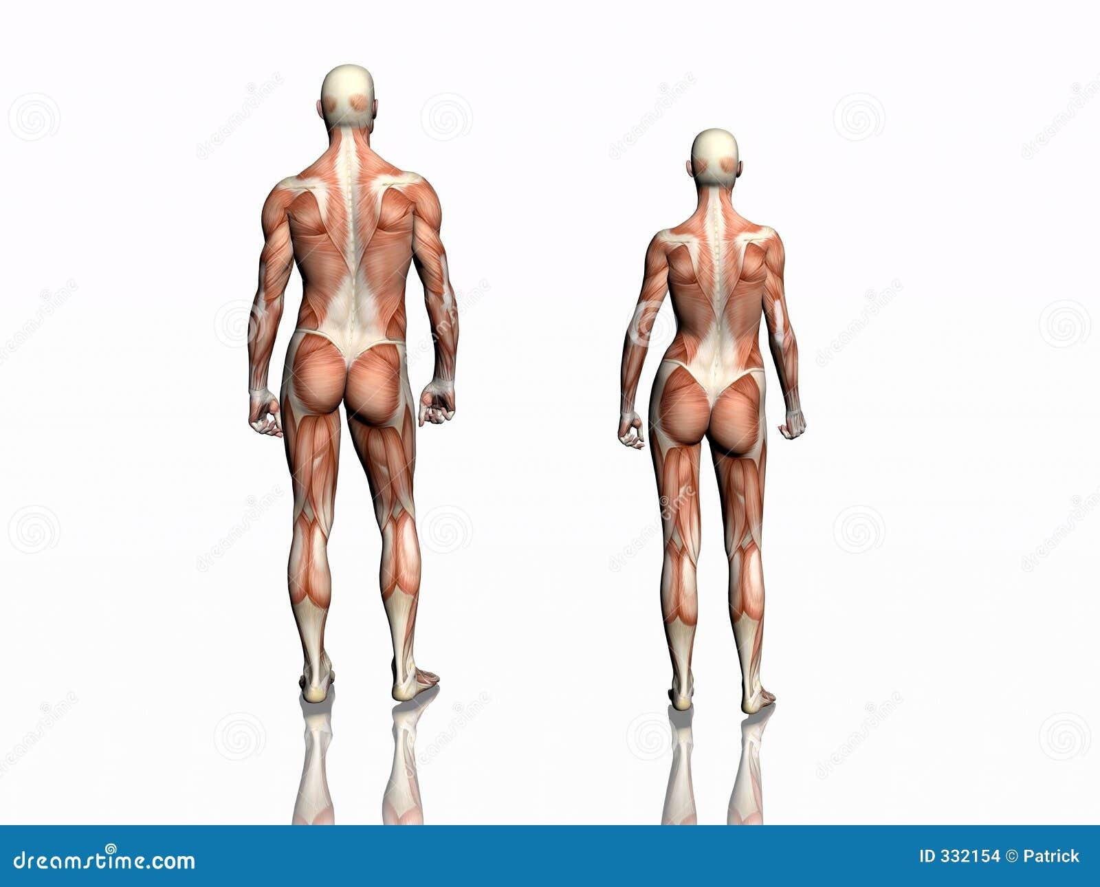 Anatomia mężczyzna kobieta