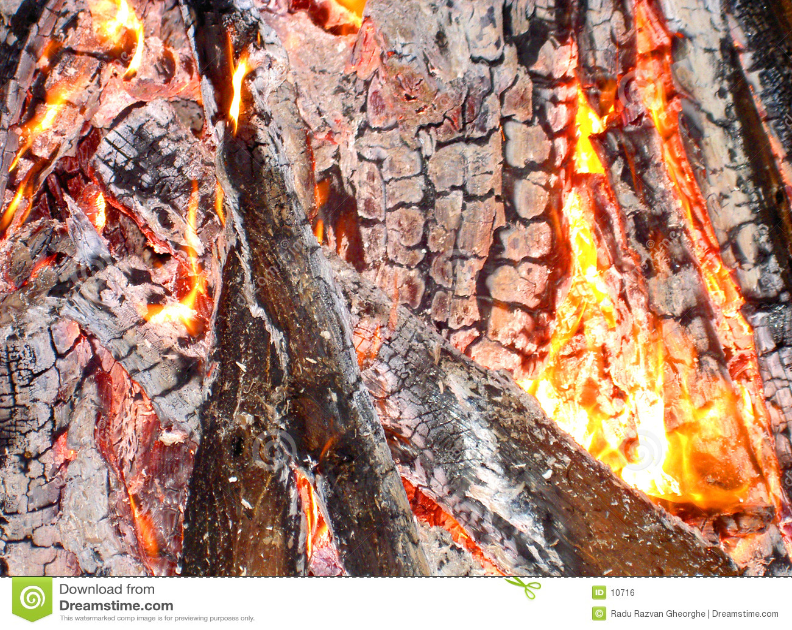 Anatomia ogień