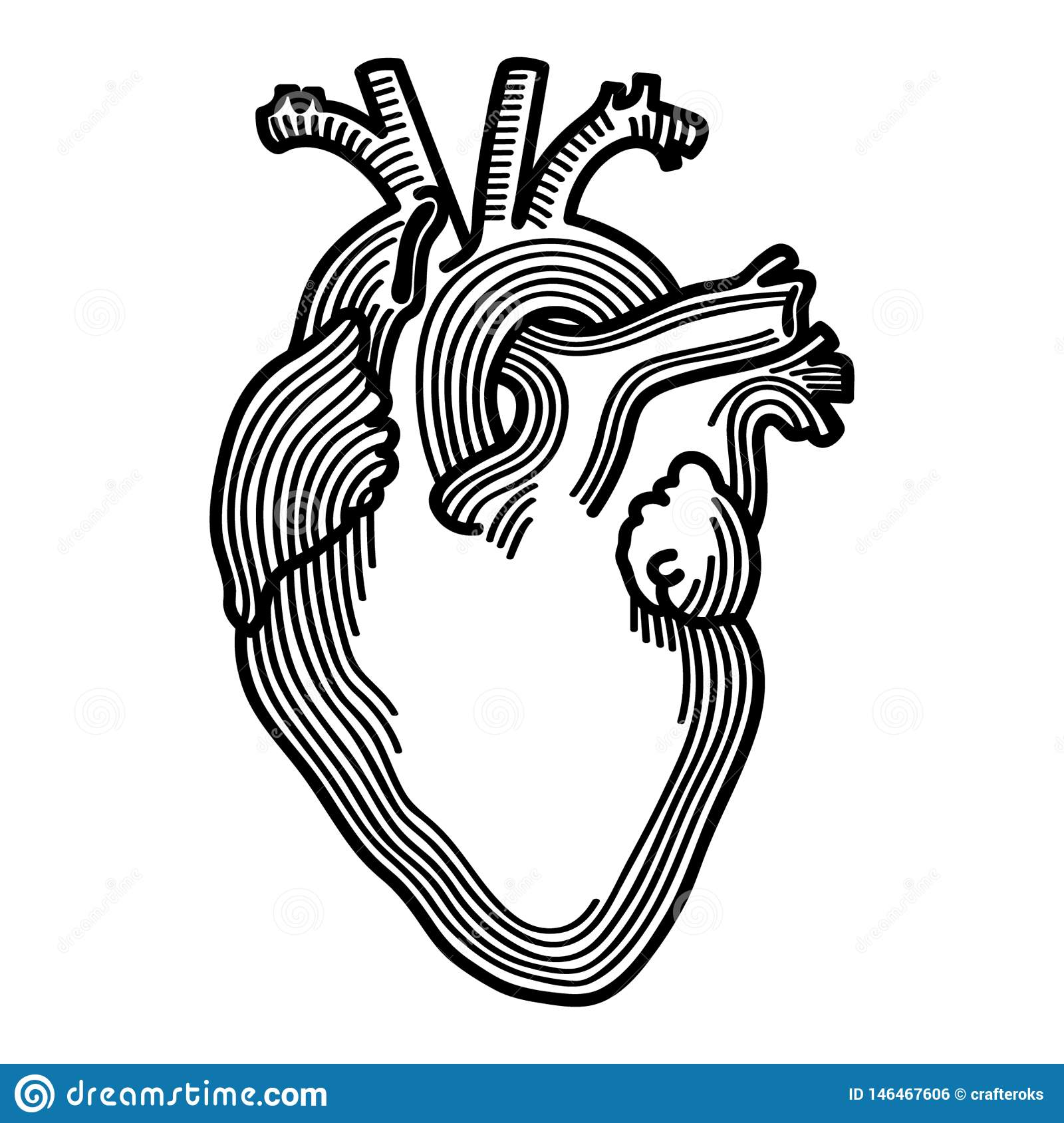 Anatomical Heart Hand Drawn Crafteroks Svg Free Free Svg File Eps Dxf Vector Logo Silhouette Icon Instant Download Digita Stock Vector Illustration Of Download Crafteroks 146467606