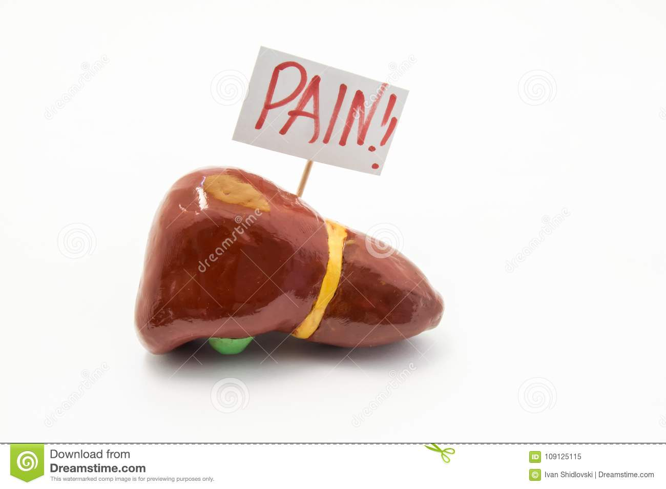 Anatomical model of liver with placard with inscription pain is on white background. Concept photo of pain symptoms and syndromes