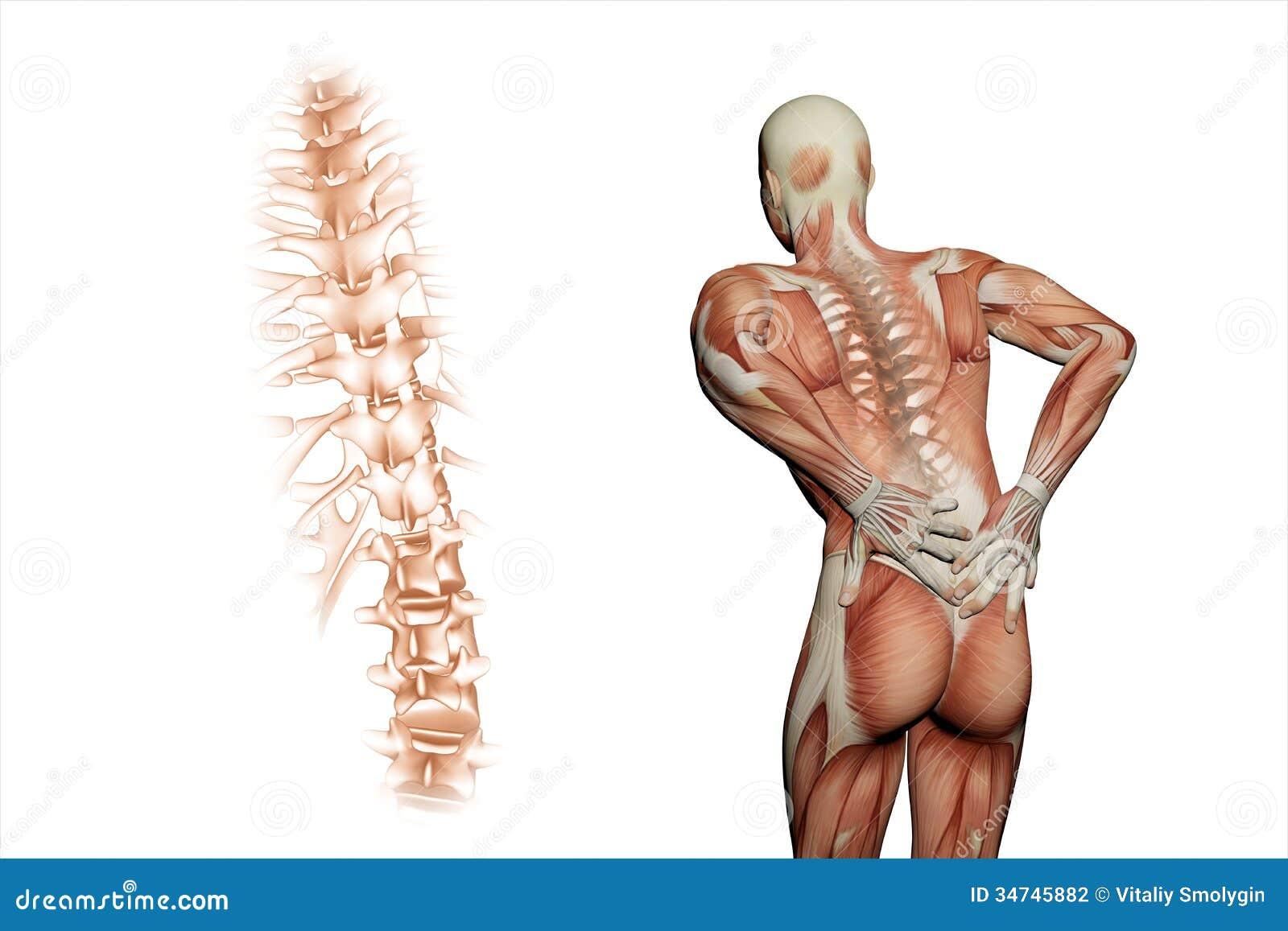 Anatomical Vision Back Pain Stock Illustration - Illustration of ...
