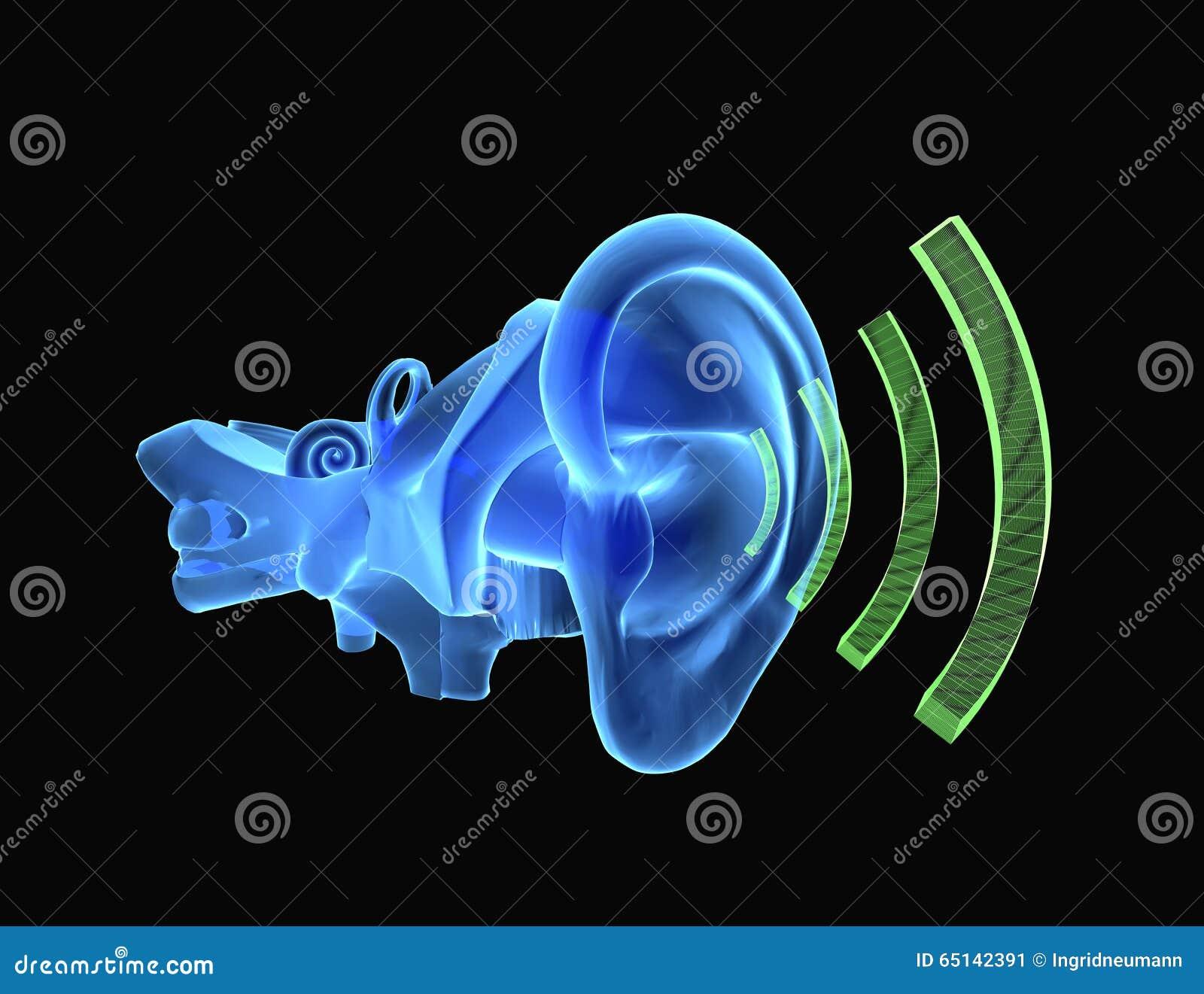 anatomie de l 39 oreille 3d avec le bruit illustration stock image 65142391. Black Bedroom Furniture Sets. Home Design Ideas