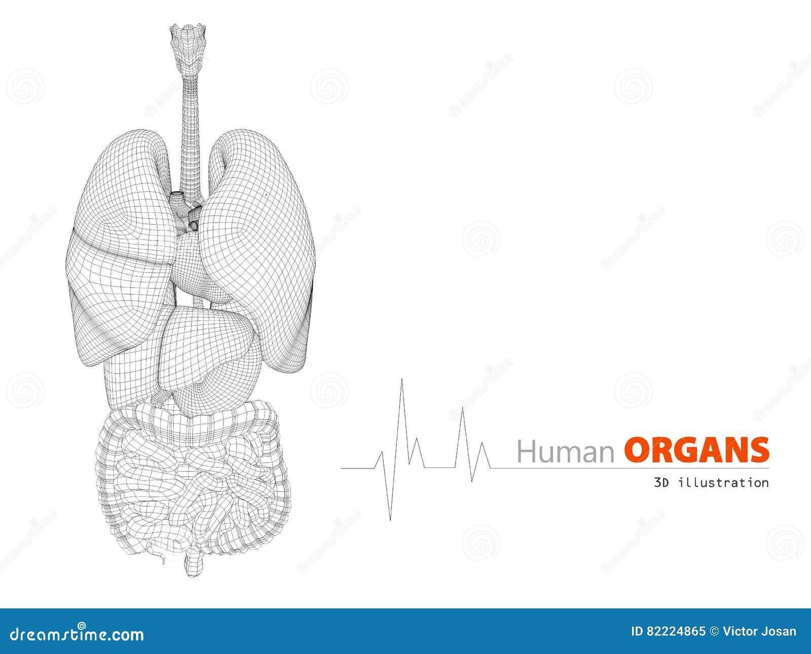 Großartig Vollständige Anatomie Des Menschlichen Körpers Fotos ...