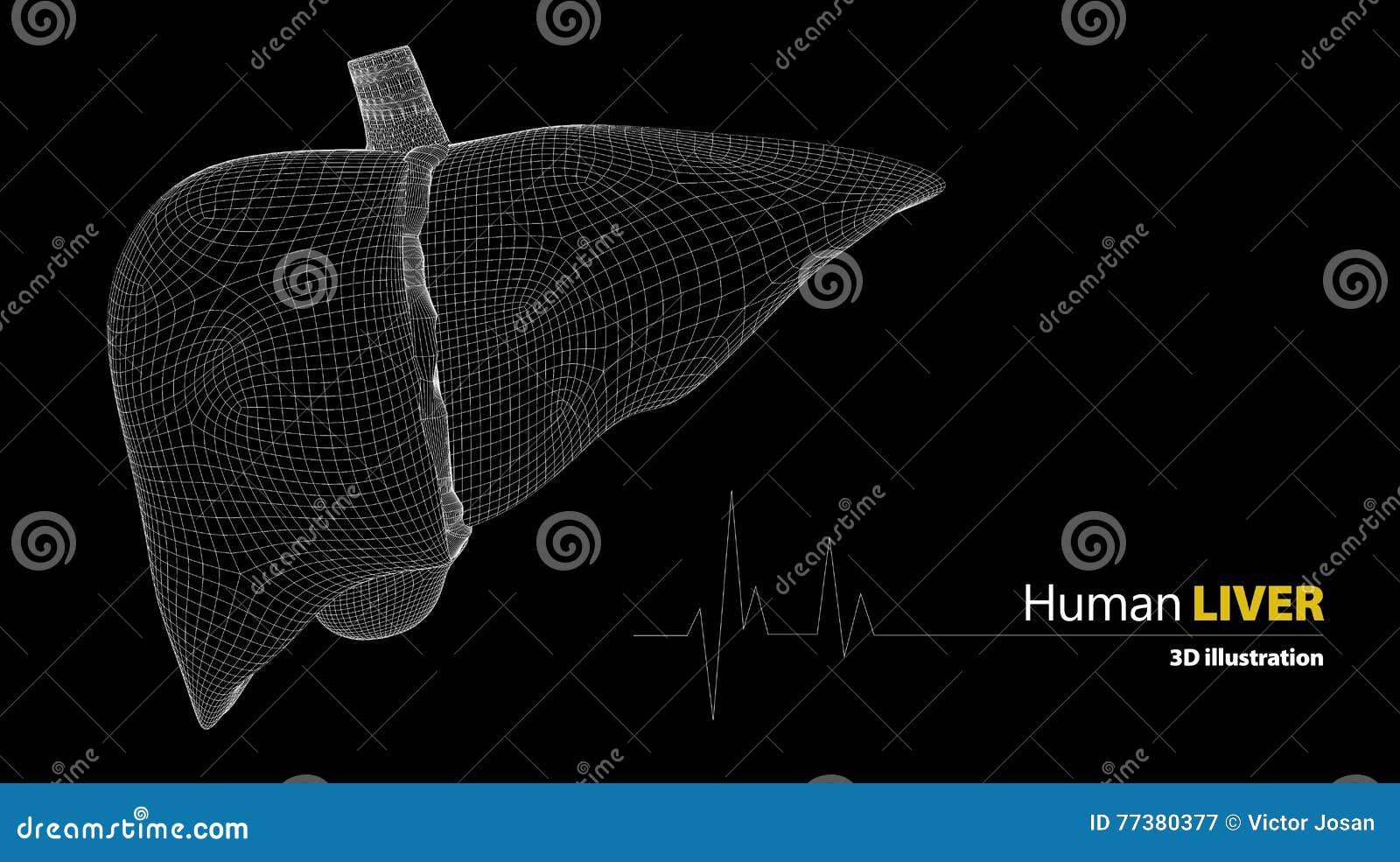 Anatomie Der Menschlichen Leber Auf Schwarzem Hintergrund Stock ...