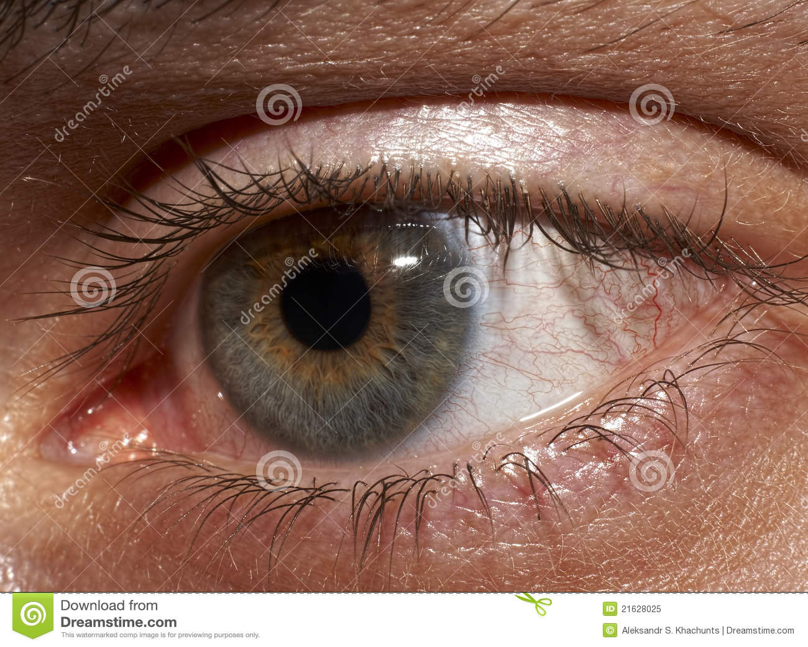 Anatomie Des Auges Stock Photos - Royalty Free Pictures