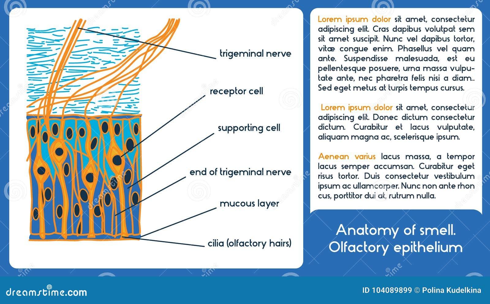 Wunderbar Labor Anatomie Und Physiologie Klassen Online Galerie ...
