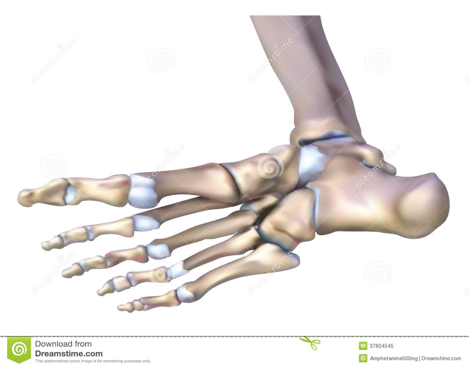 Fein Anatomie Des Knochengewebes Bilder - Menschliche Anatomie ...