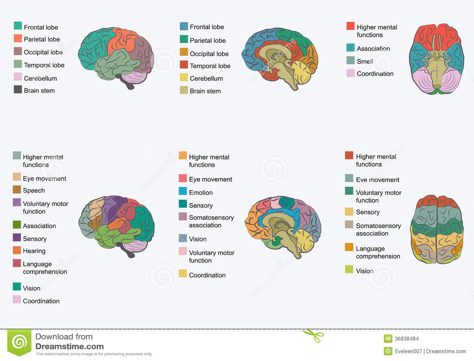 Motorische Neuroprothesen - by Paula Céline on Prezi